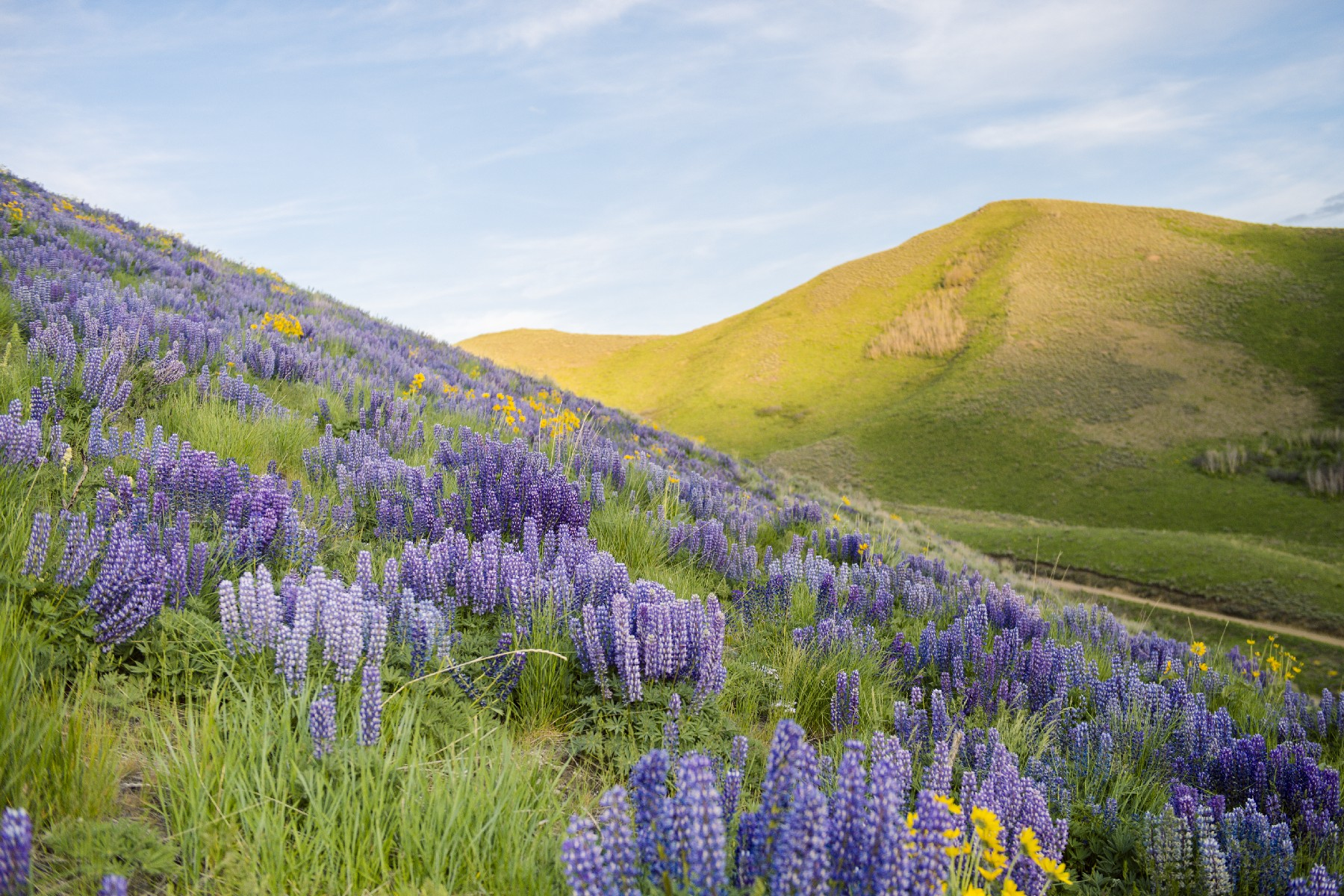 Land for Active at Quigley Farm Quigley Farm Hailey, Idaho 83333 United States