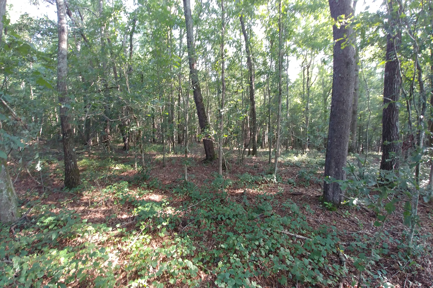 Land for Sale at Incredible Acreage In Cleveland 366 Jess Hunt Road Cleveland, Georgia 30528 United States