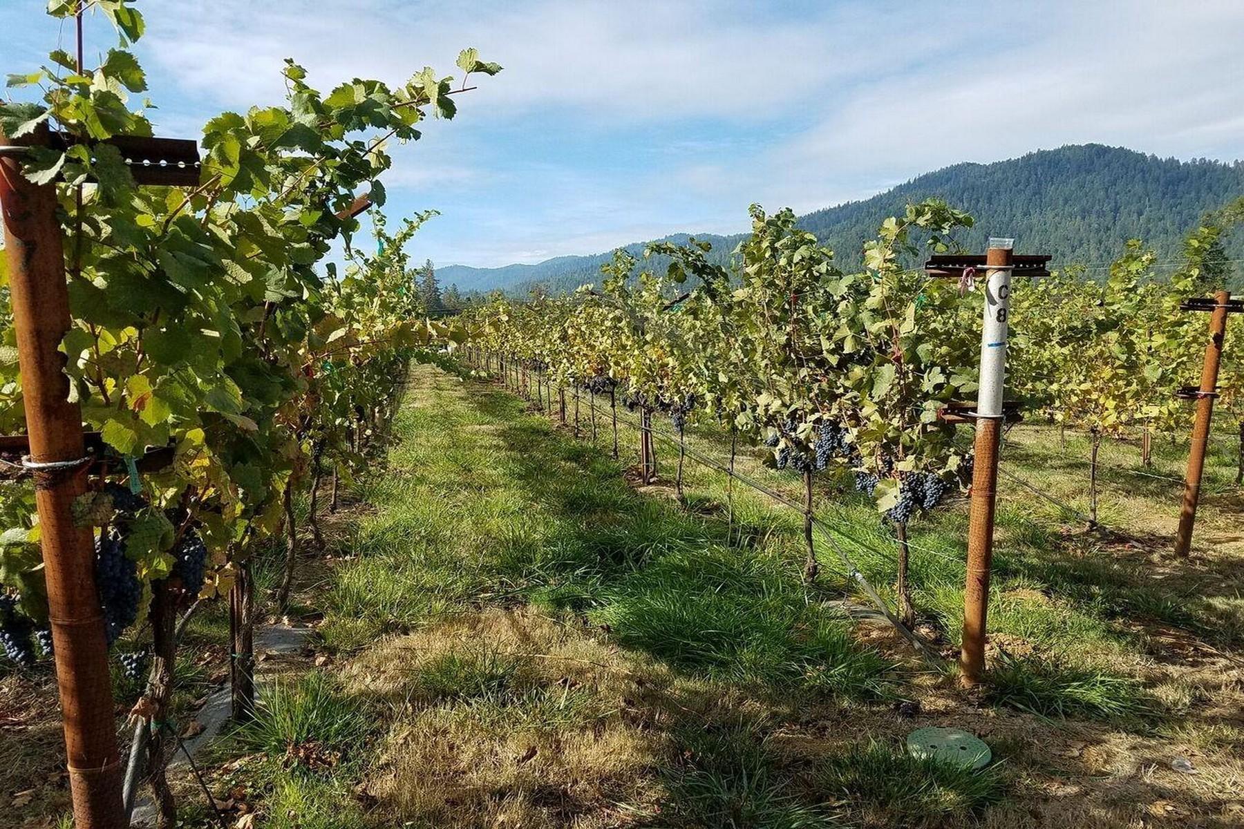 Additional photo for property listing at So. Oregon Organic Vineyard! 175 Quail Lane, Grants Pass, Oregon 97526 Estados Unidos