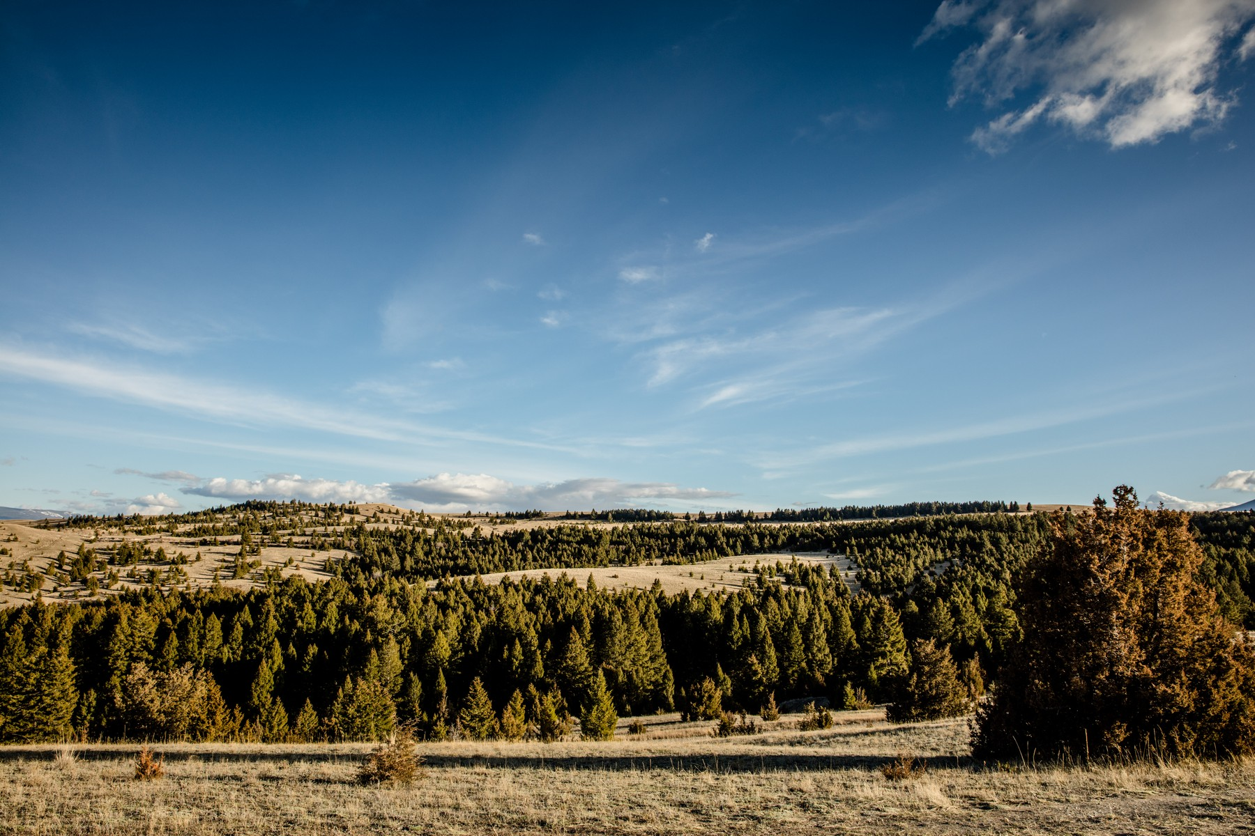 Land for Sale at 830 Bighorn Road Deer Lodge, Montana 59722 United States