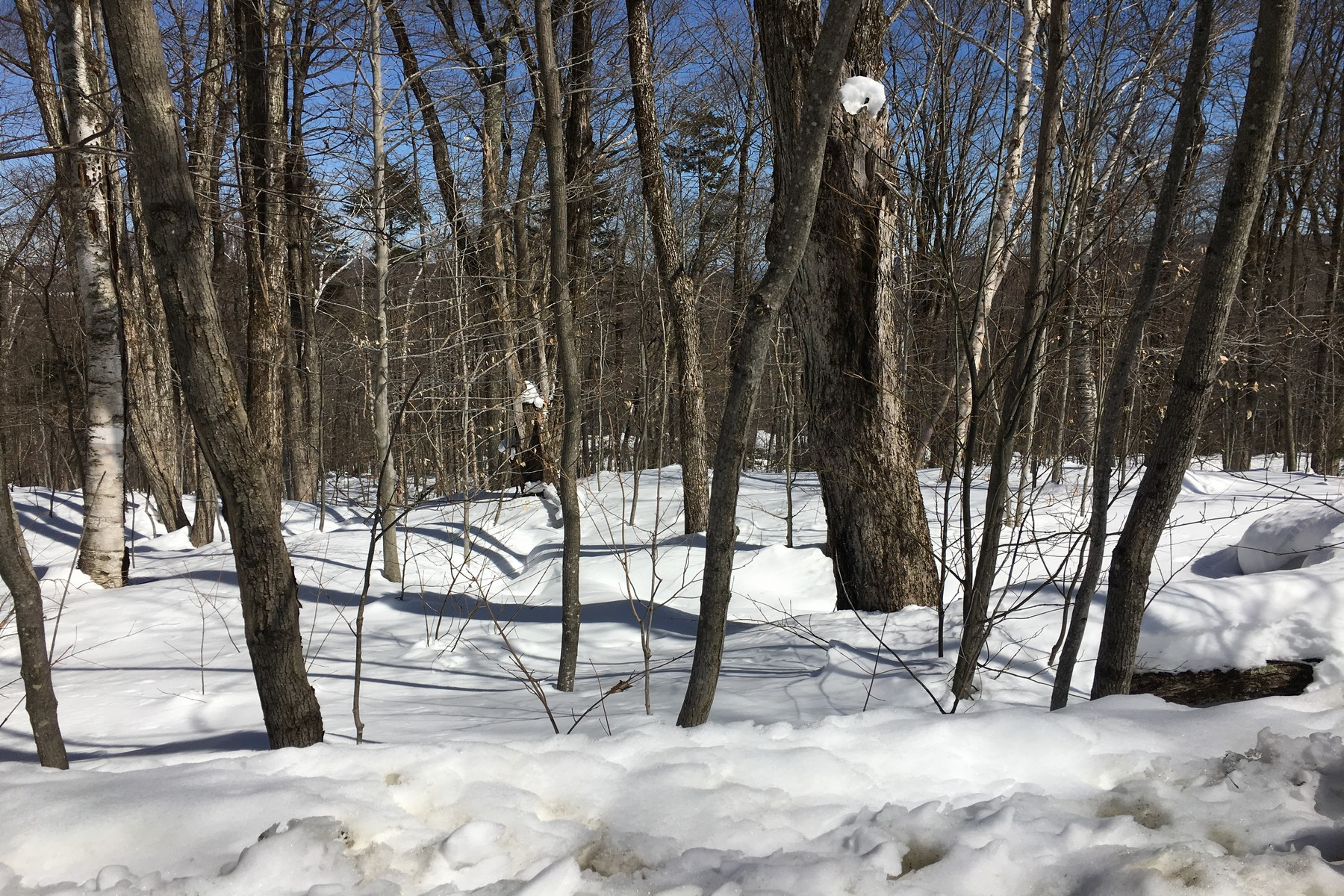 Land for Sale at Birch Hill Road, Windham Birch Hill Rd Windham, Vermont 05359 United States