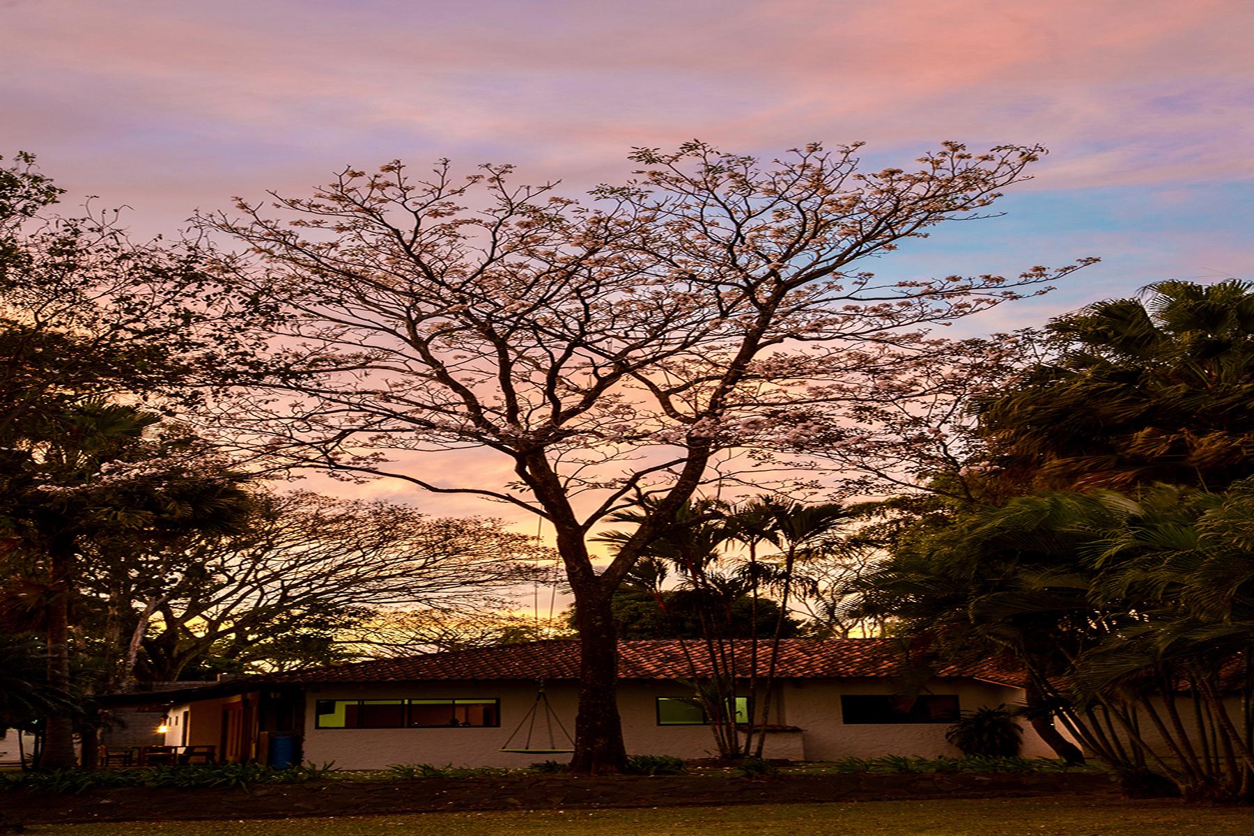 Single Family Homes por un Venta en Pine Tree Hideaway Other Alajuela, Alajuela Costa Rica