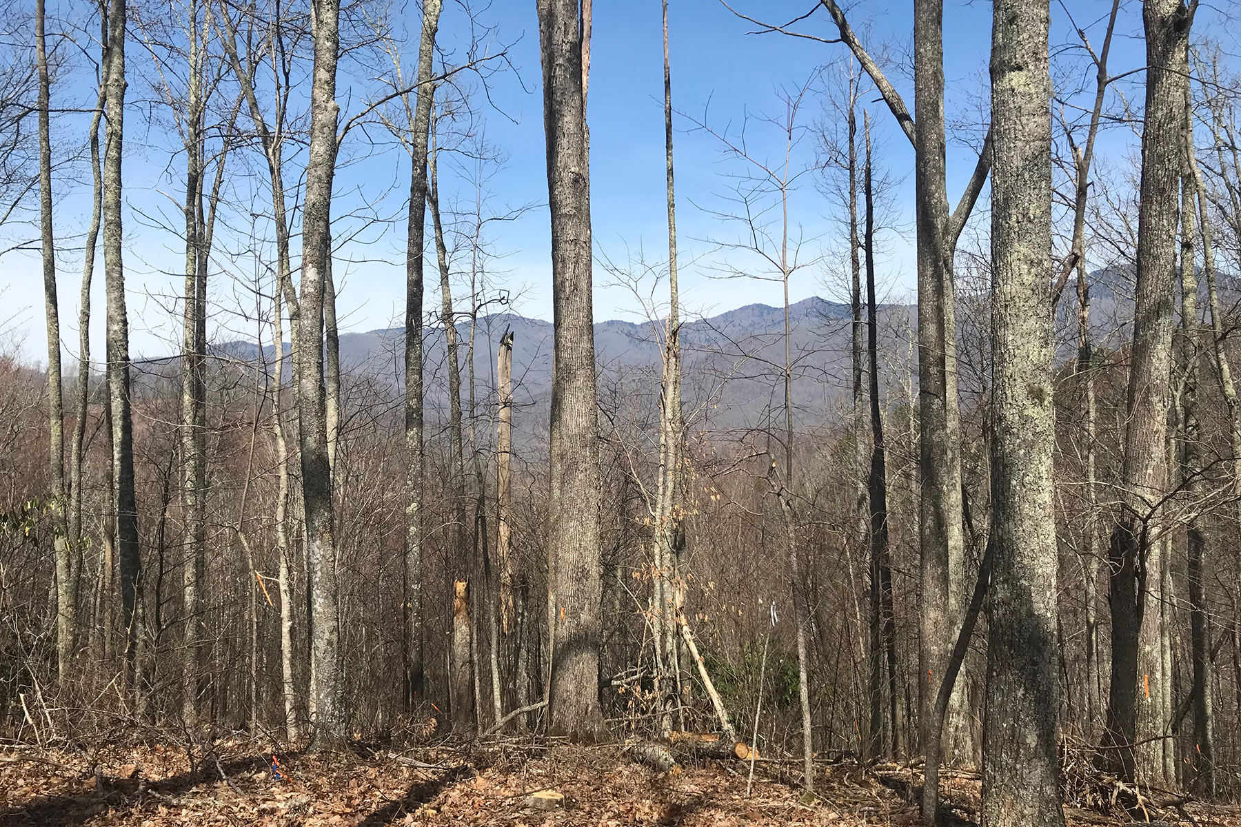 Land for Active at BALSAM MOUNTAIN PRESERVE 235 Down The Hill Rd , 235 Sylva, North Carolina 28779 United States