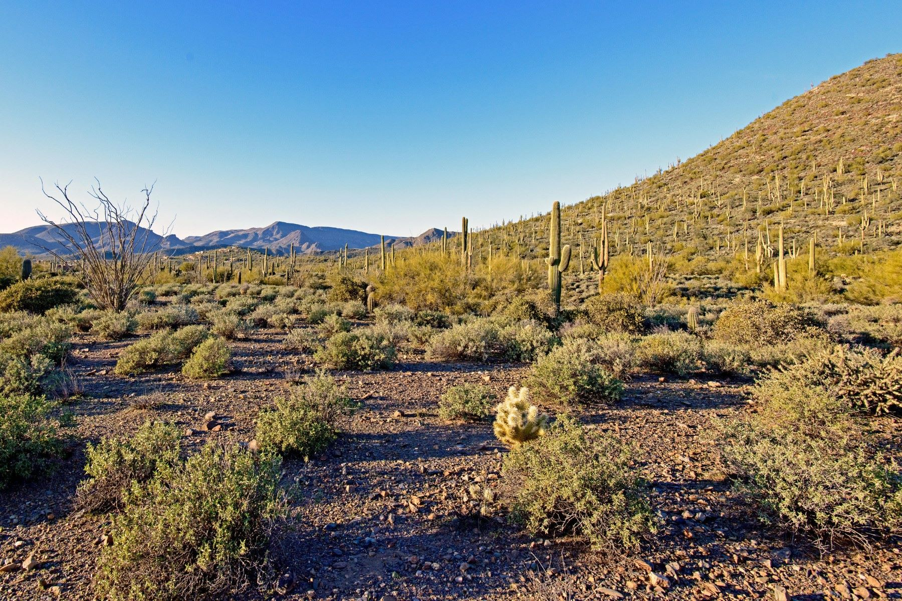 토지 용 매매 에 Pristine 22.55 Acre Parcel of Sonoran Desert 7500 E Highland Rd, Cave Creek, 아리조나 85331 미국