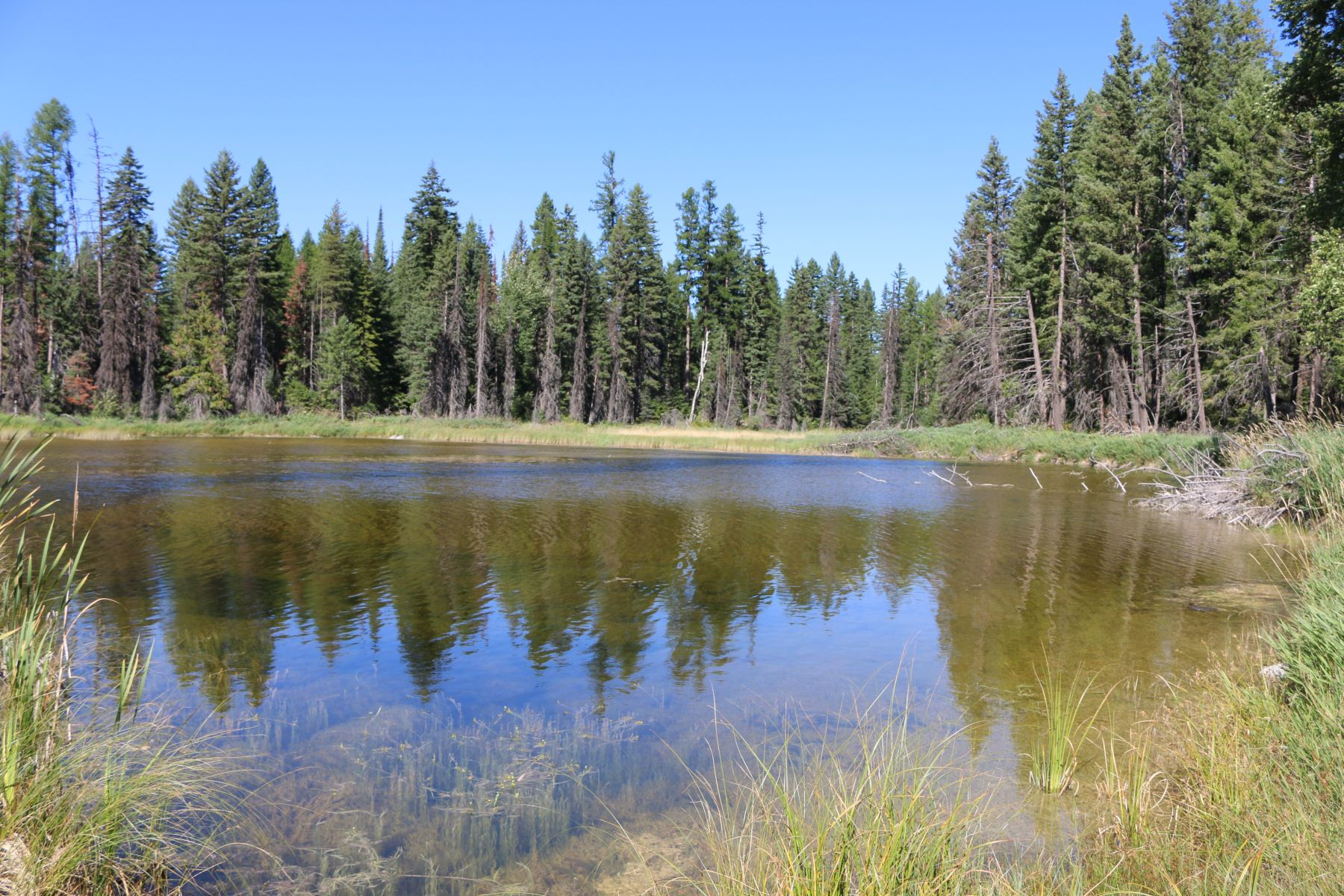 Land for Sale at NHN Cilly Creek, Swan Lake, MT 59911 00000 Cilly Creek Road Fs Rd #9523 , Fs Rd #9523 Swan Lake, Montana 59911 United States