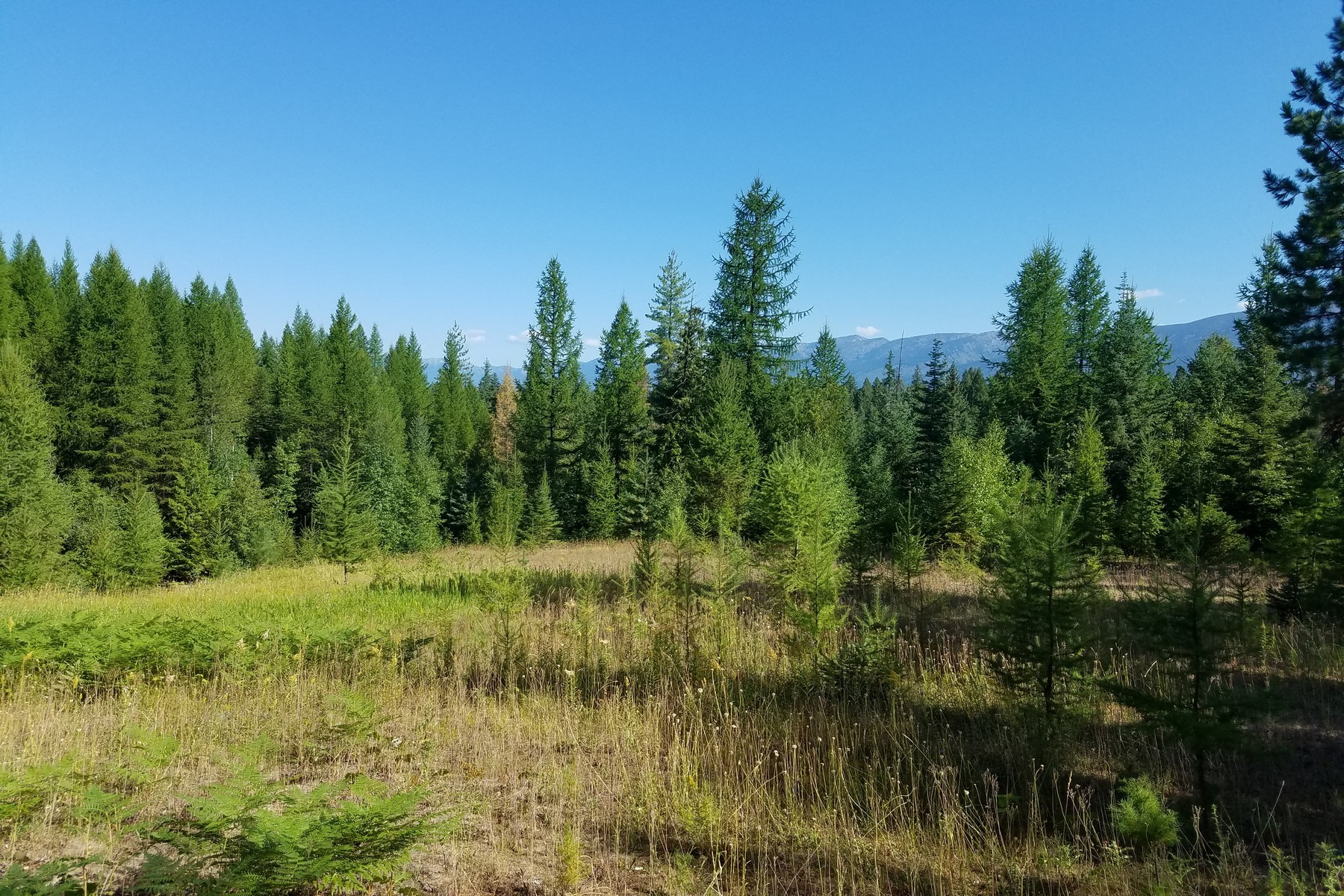 Additional photo for property listing at 1557 Bug Creek Rd , Bigfork, MT 59911 1557  Bug Creek Rd Bigfork, Montana 59911 United States