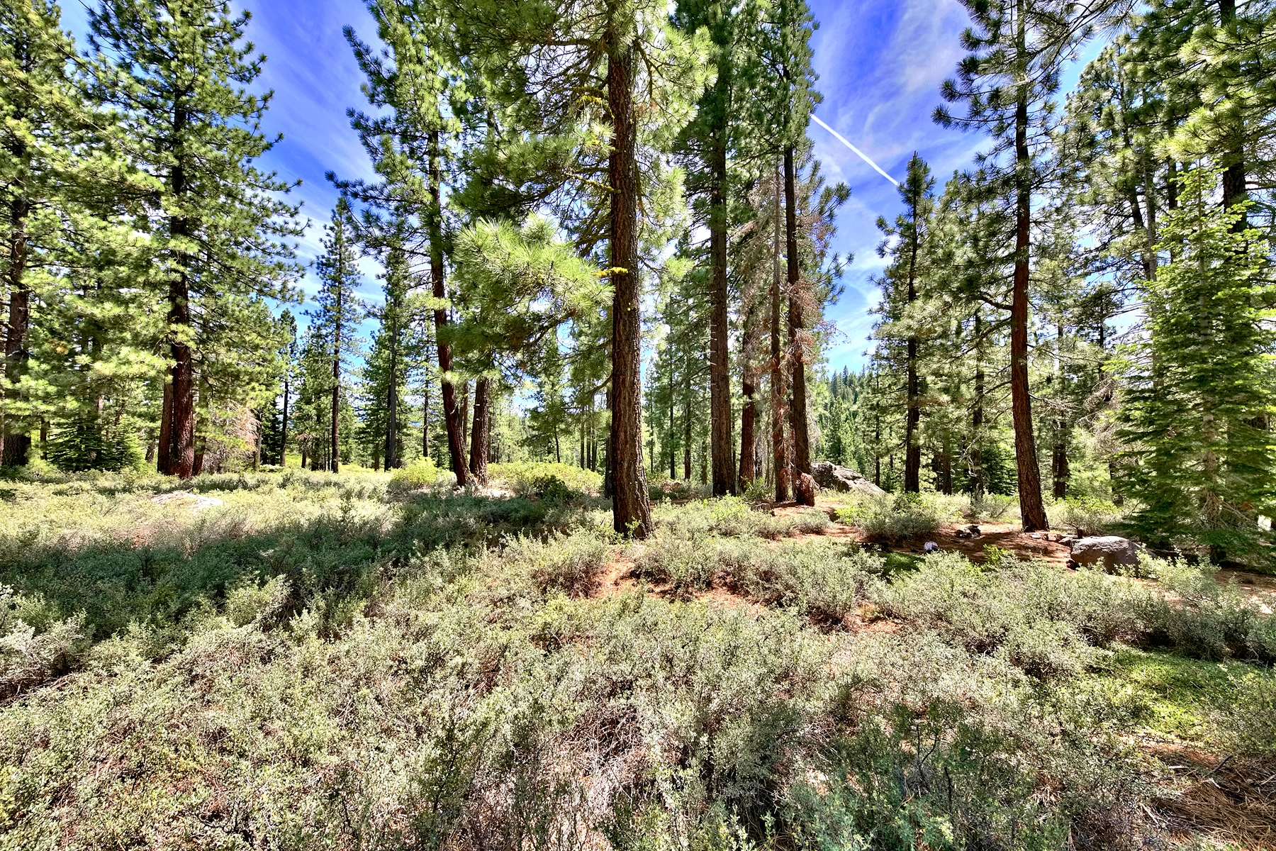 Additional photo for property listing at Rare 23.76 acre parcel 0 Pioneer Trail Truckee, California 96161 United States