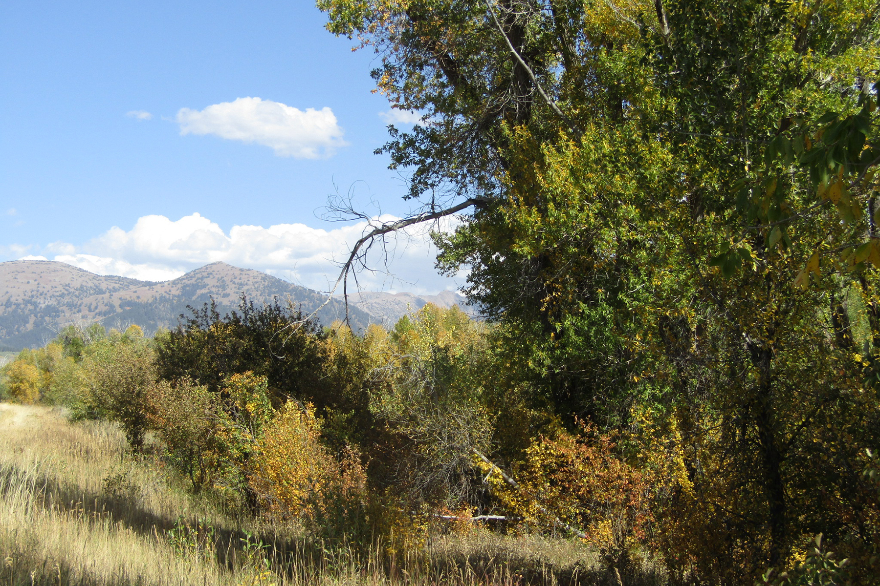Land for Sale at 5 Ski Hill Rd Lots With Trees 2079 Aerie Cir Driggs, Idaho 83422 United States