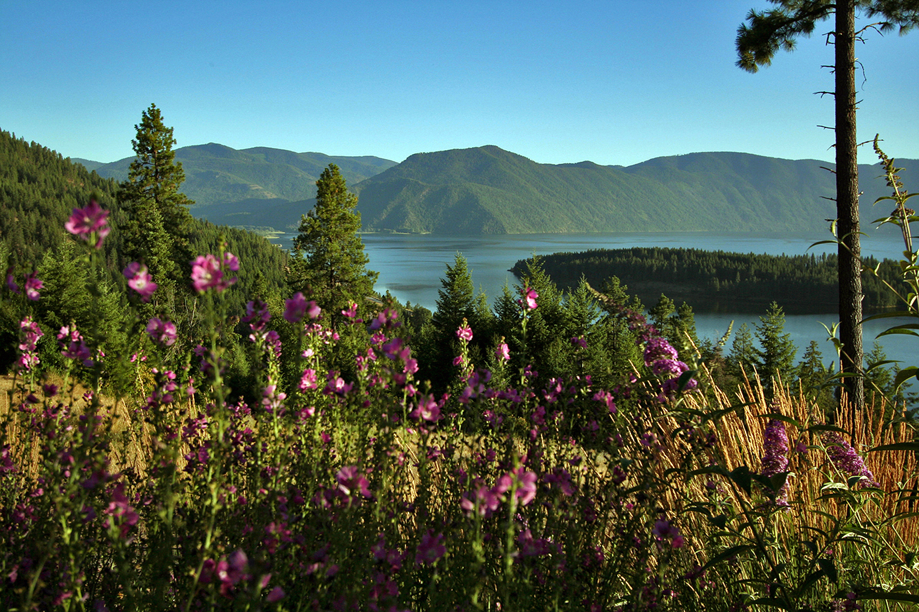 Land for Active at Antler Point Estates B1 L1 Sasha Point Hope, Idaho 83836 United States