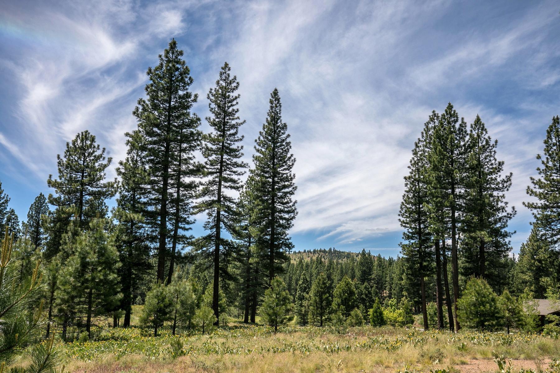 Additional photo for property listing at 389 Blacktail Ridge, Portola, CA 96122 389 Blacktail Ridge Portola, California 96122 Estados Unidos