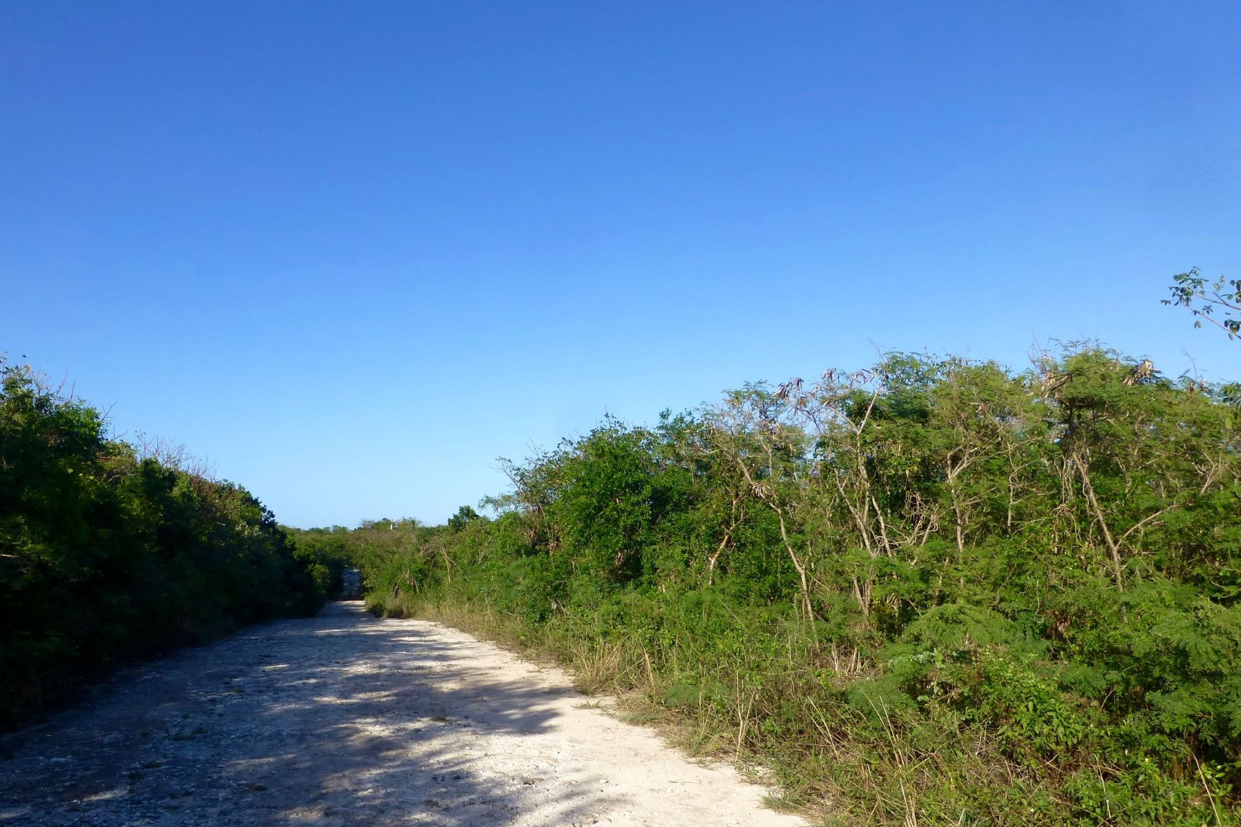 Additional photo for property listing at Lot 8, Block 47, Section E Eleuthera Island Shores, 格里高利城, 伊路瑟拉 巴哈马
