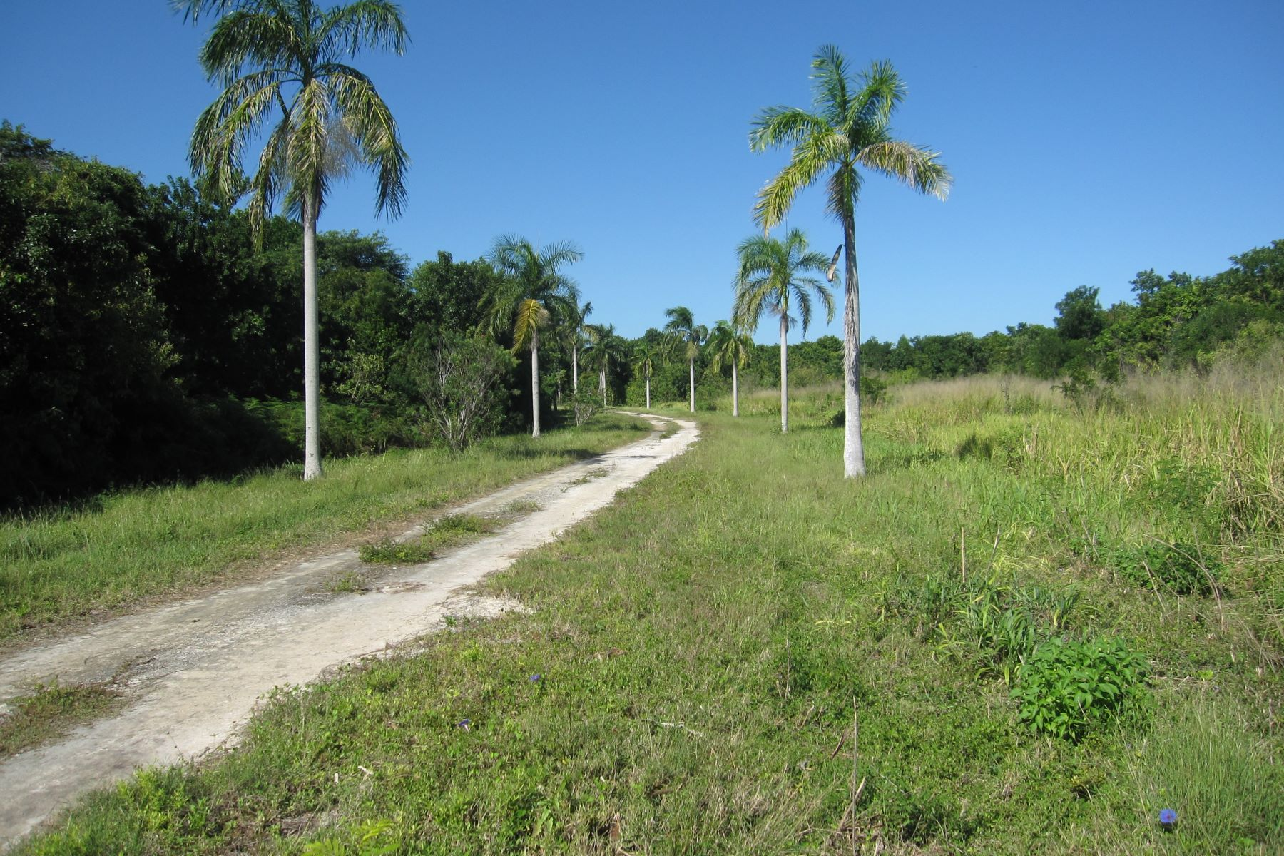 per Vendita alle ore 12,000 Ft. of Linear Gorgeous Beachfront Investment Opportunity Corozal, Corozal, Belize