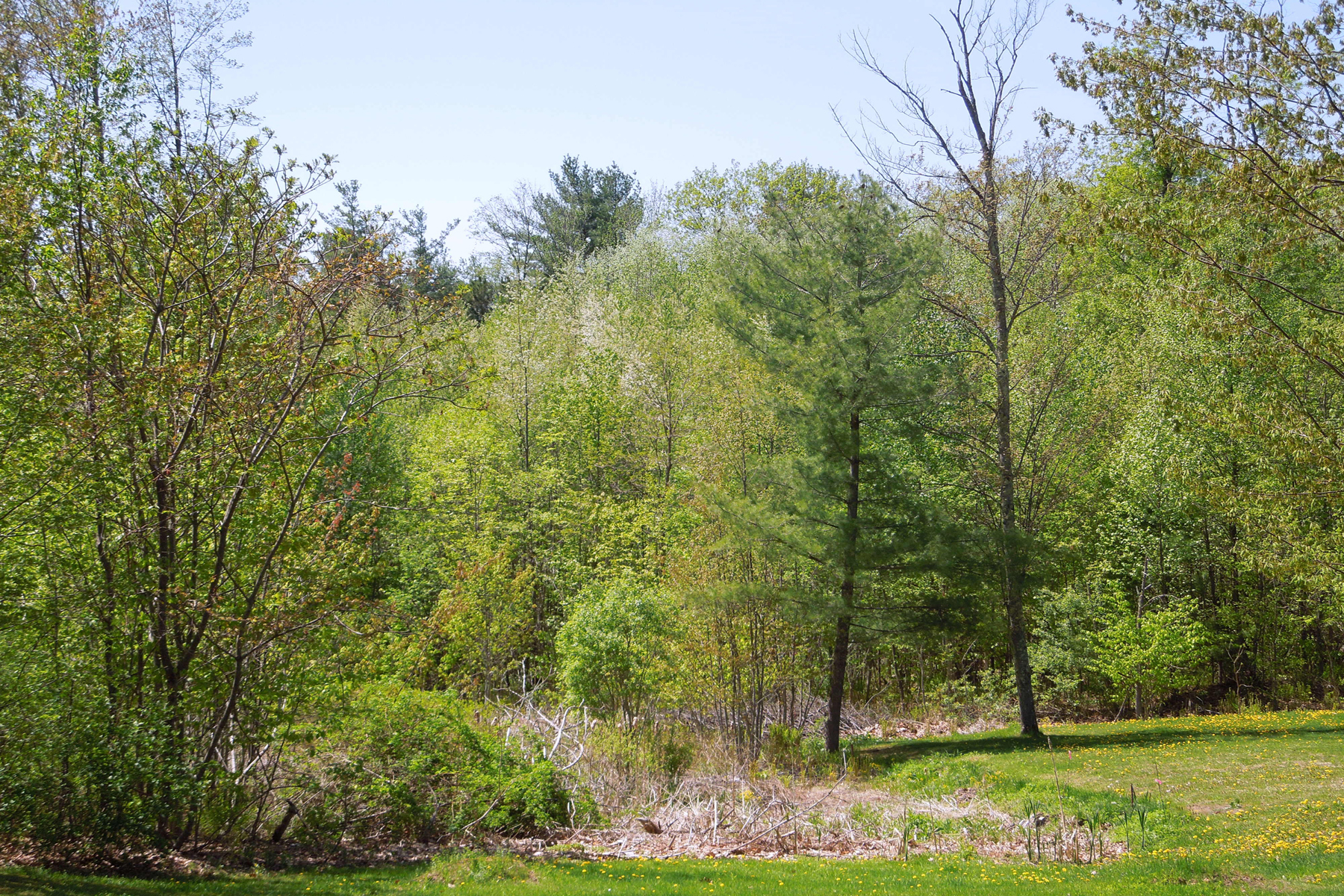 Land for Sale at Wooded Privacy 50 Terounzo Rd Pittsford, Vermont 05763 United States