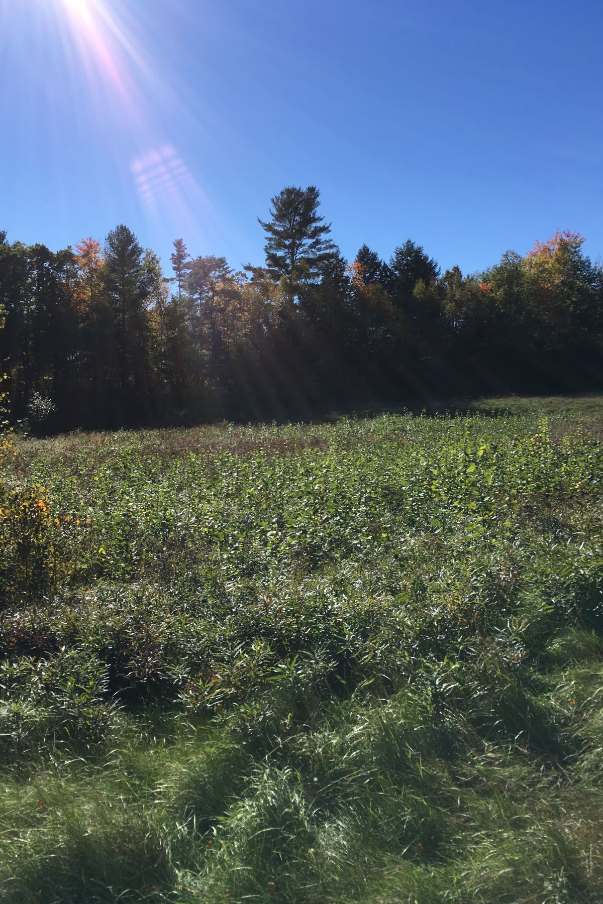 Land for Sale at West Side Drive, Haverhill West Side Dr Haverhill, New Hampshire 03774 United States