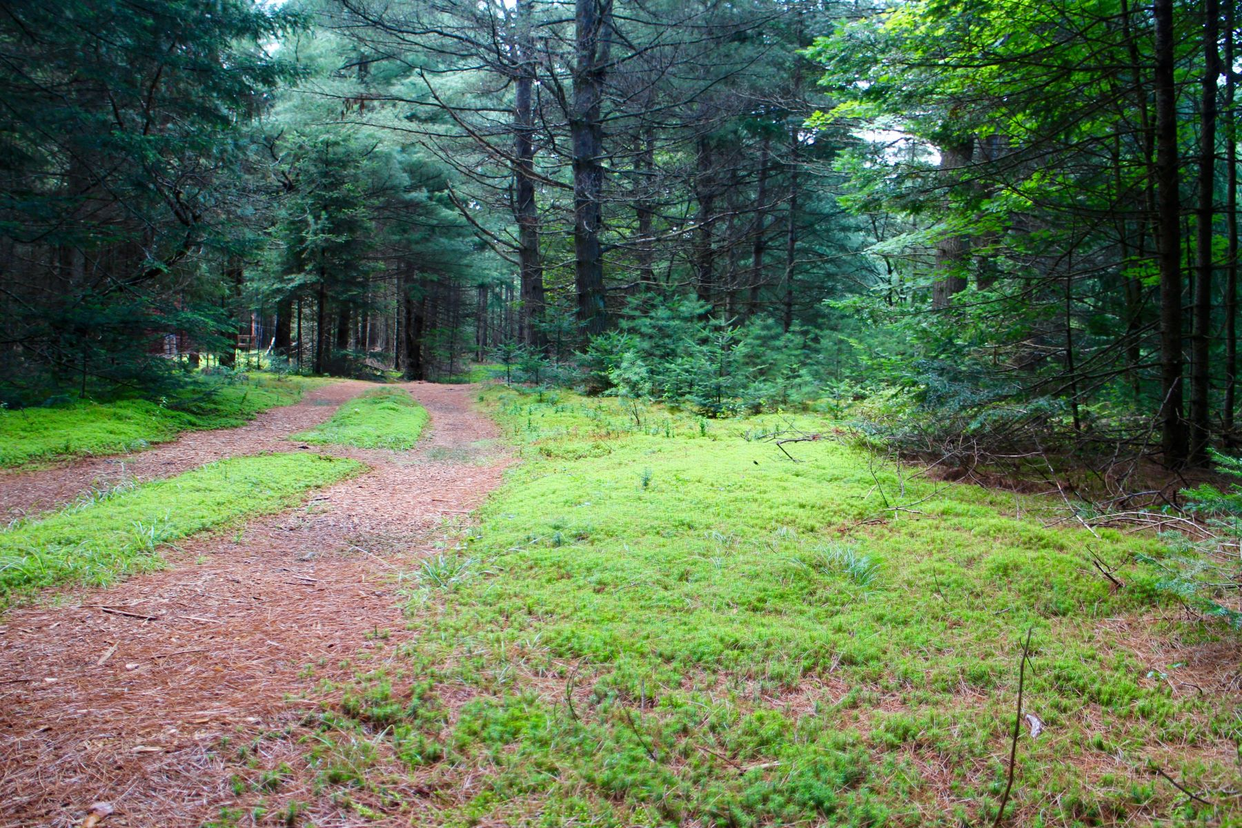 Additional photo for property listing at Log camp in Snowbird Lake area 12486 Meekerville Rd. North Forestport, New York 13338 United States