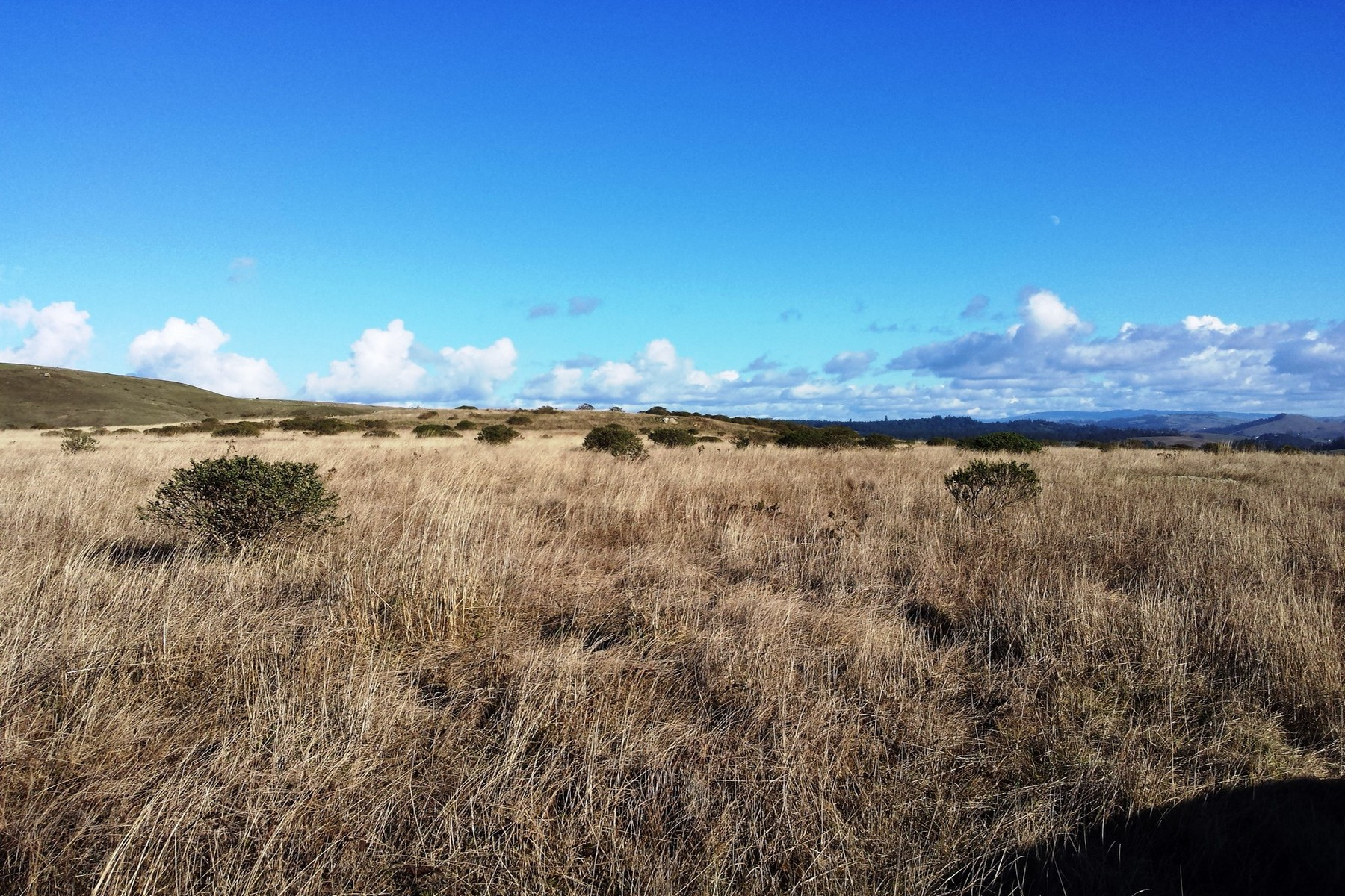 Additional photo for property listing at Sonoma County Coast Ranch Land 22611 Coleman Valley Road Bodega Bay, California 94923 United States