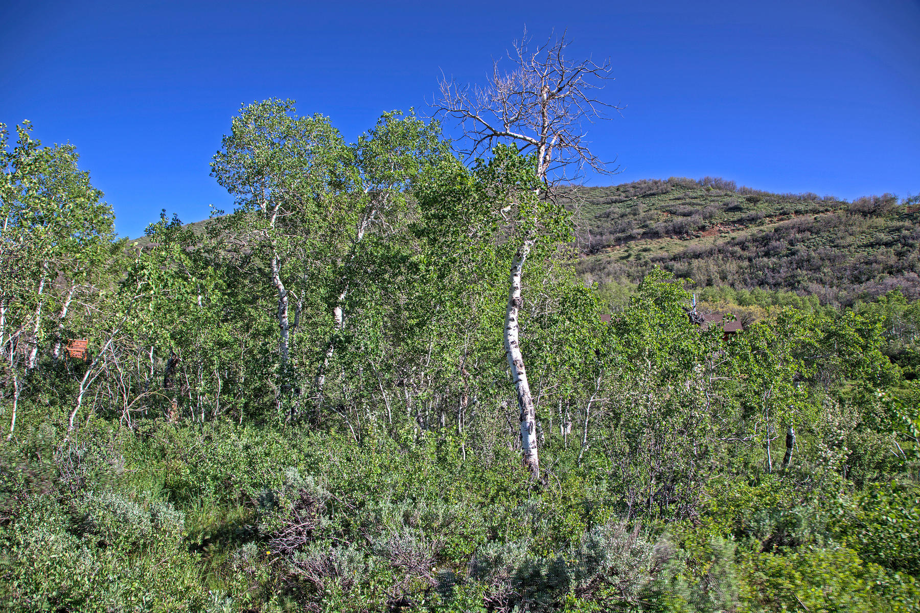 Additional photo for property listing at 5 Acres in Weber Canyon 149 Mountain Aire Lower Lp 奥克利, 犹他州 84055 美国