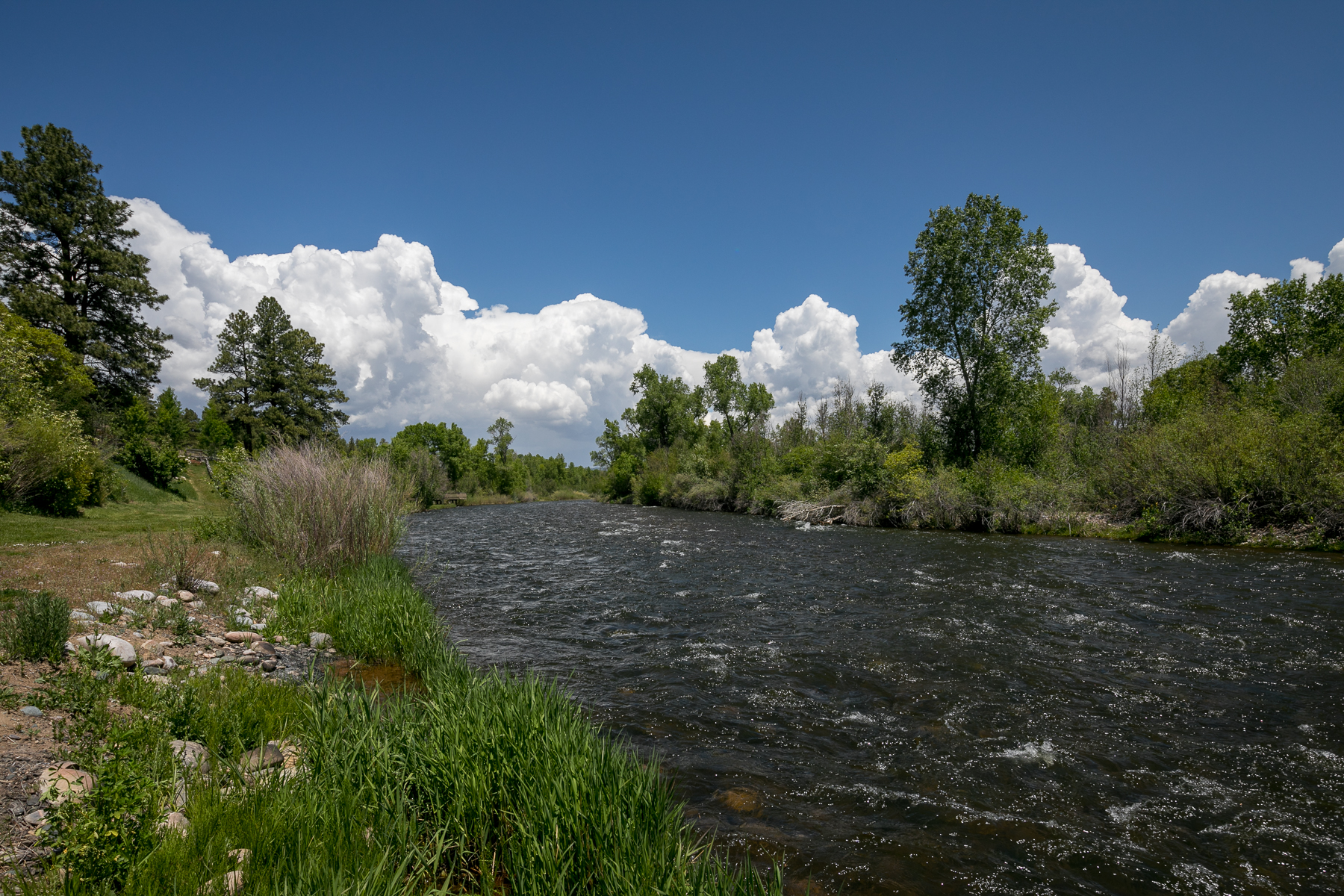 Land for Sale at 600 CR 502 Bayfield, Colorado 81122 United States