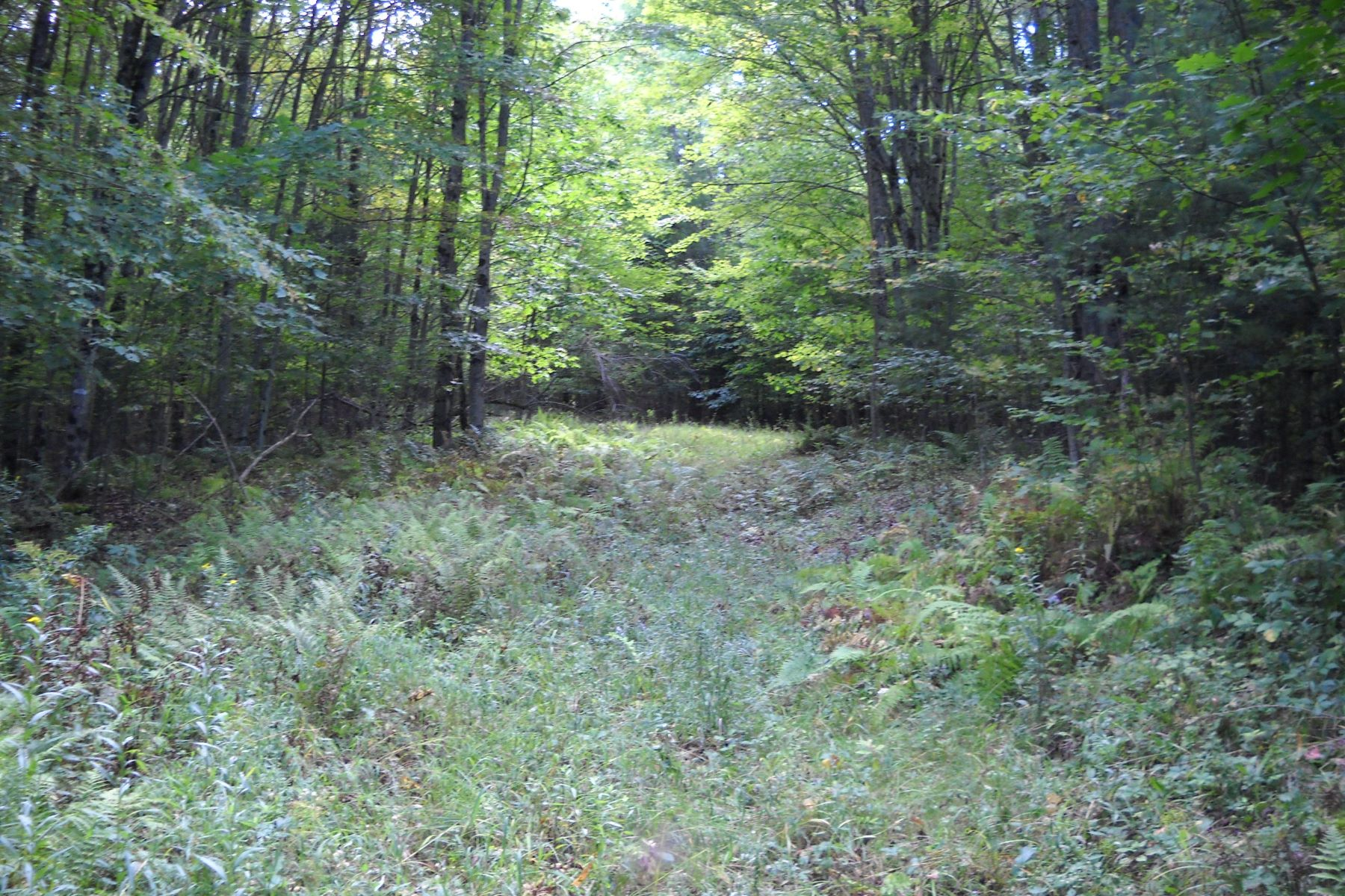 Land for Active at Thirty Plus Acres of Land in Piermont 31 Barton Rd Piermont, New Hampshire 03779 United States
