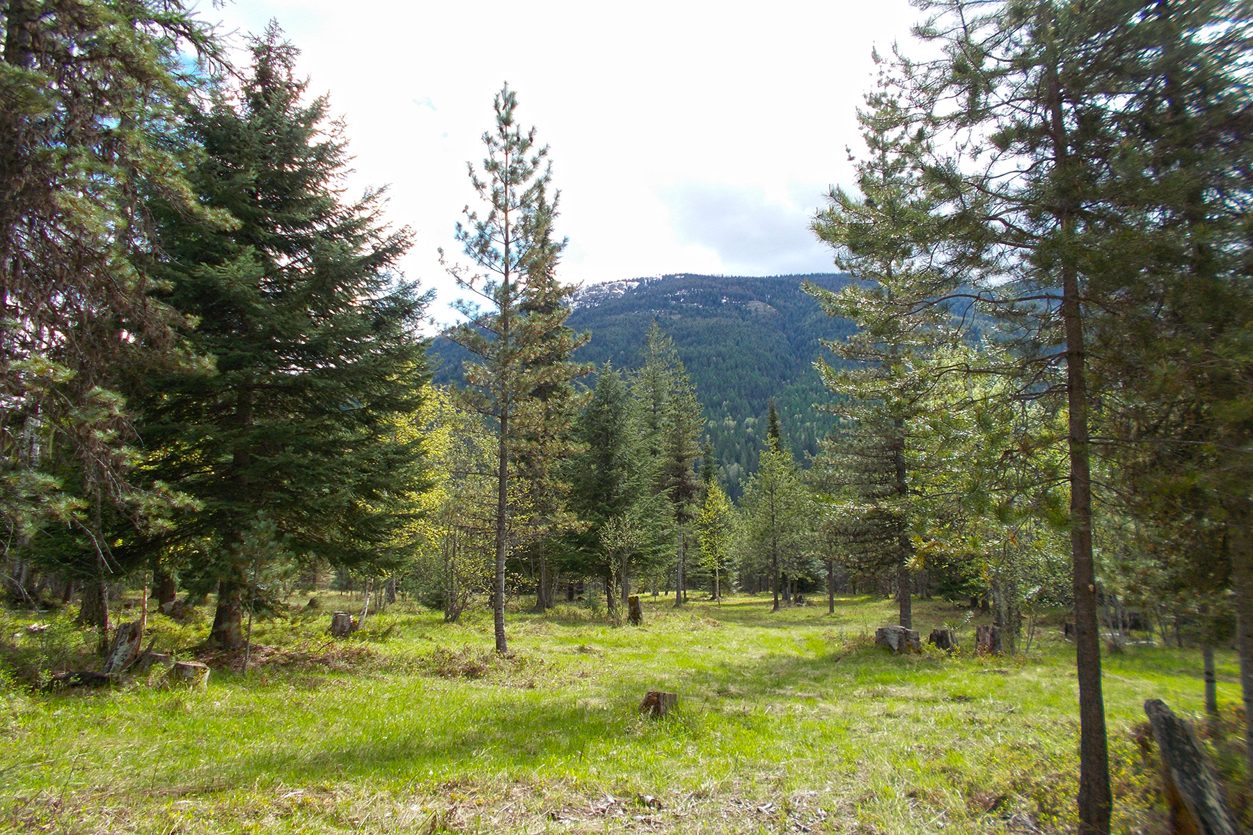 Land for Sale at 28+ acres bordering National Forest NNA 28 acres off Moyie River Road Eastport, Idaho 83826 United States