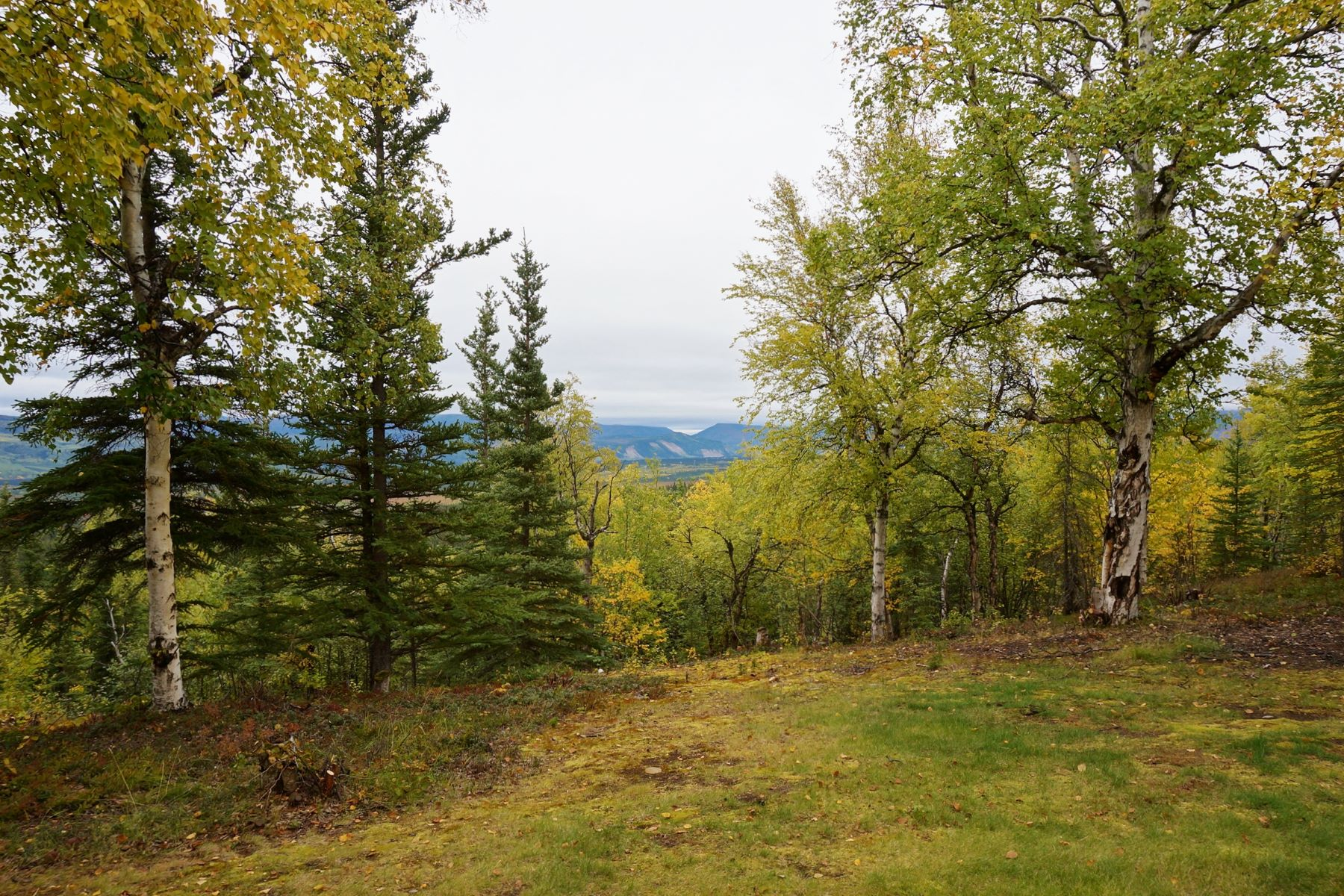 Land for Sale at Lot 6 Ridgetop Cabins Road Ridgetop Subdivision Healy, Alaska 99743 United States