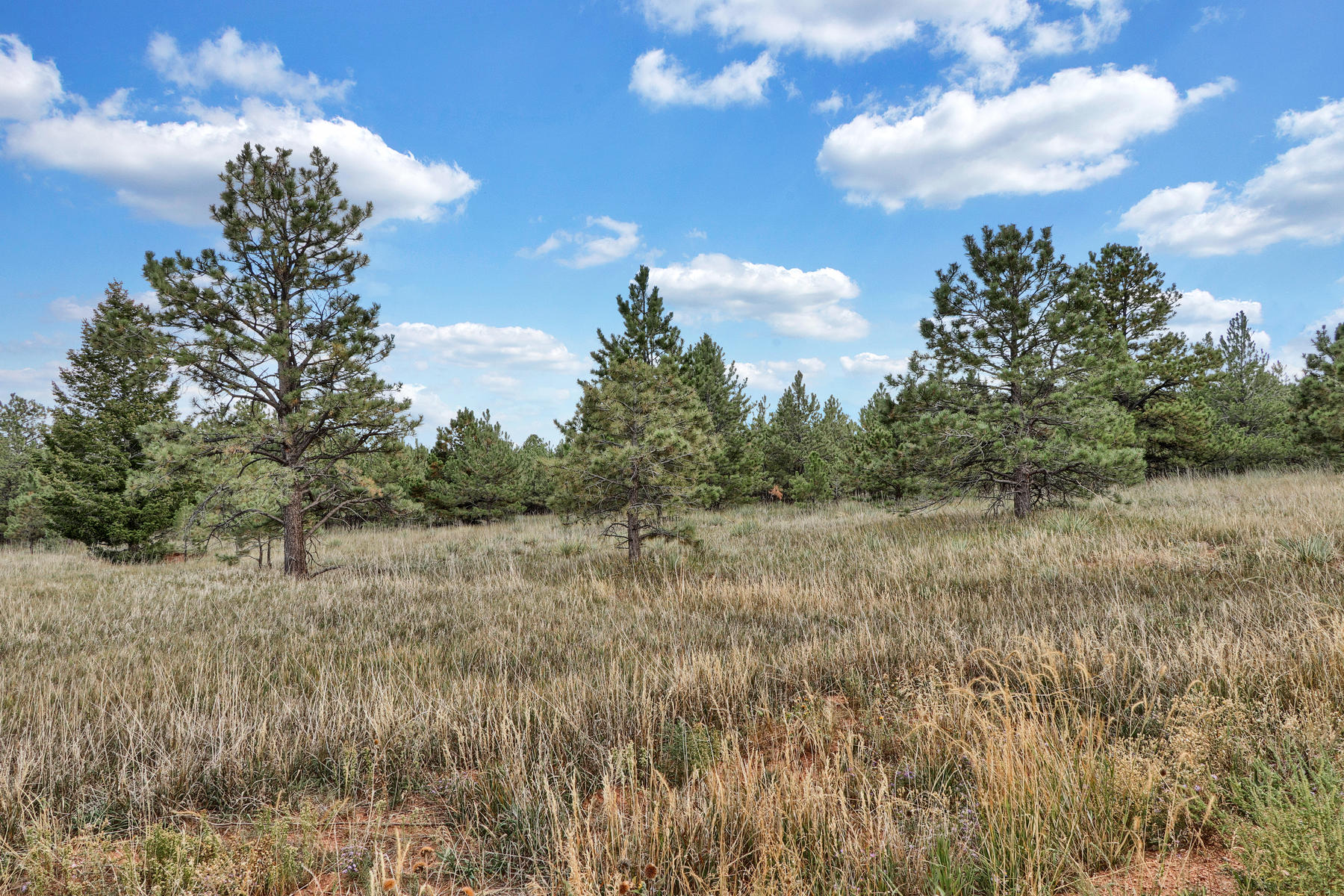 Land for Active at Lot 12 Forest View Rd Lot 12 Forest View Rd Monument, Colorado 80132 United States