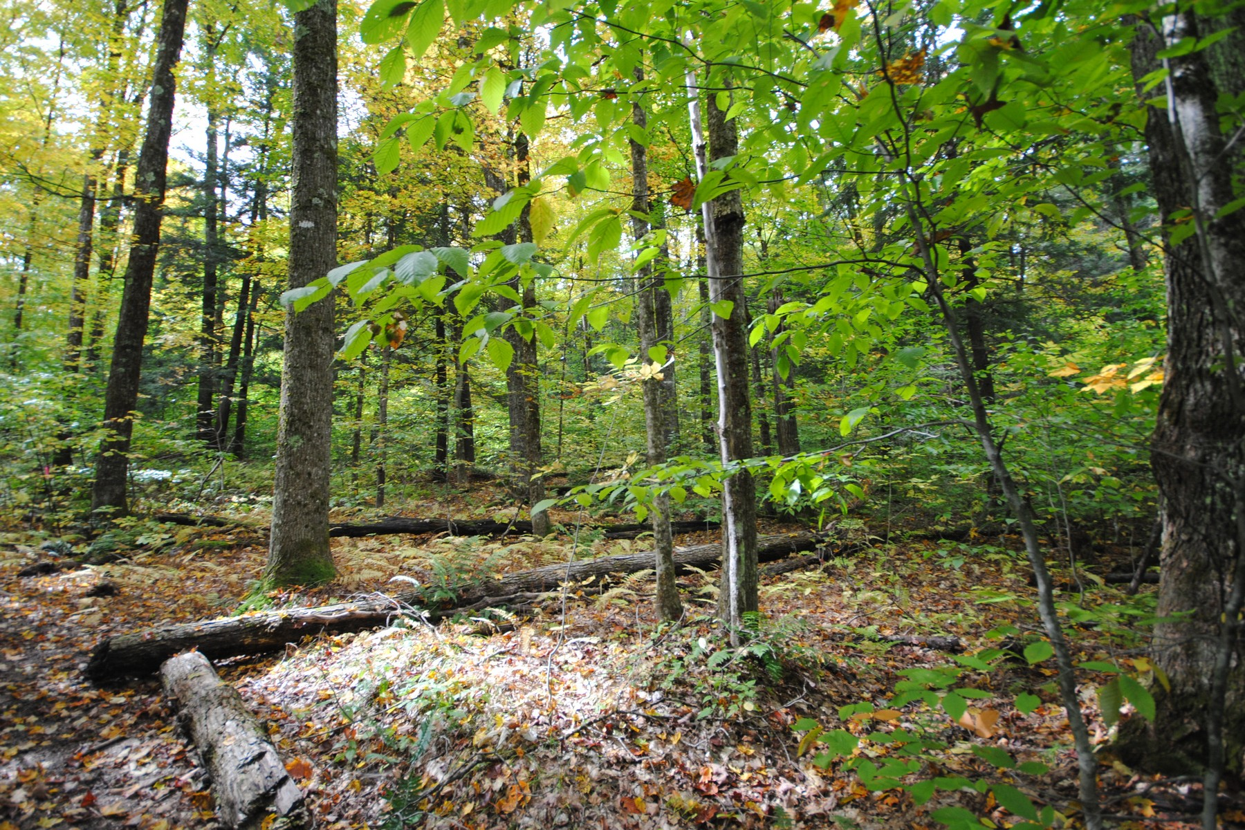 Land for Sale at Fitts Road Wardsboro, Vermont 05360 United States