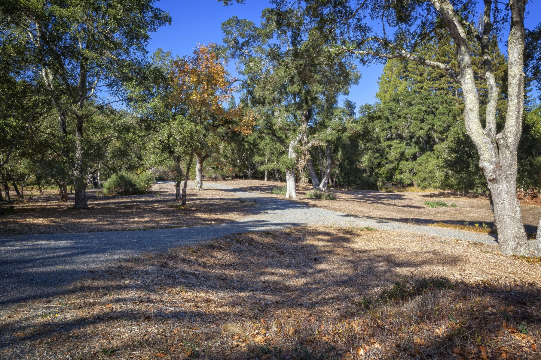 Additional photo for property listing at 10.5 Acre Estate Property 160 Greer Road Woodside, California 94062 United States