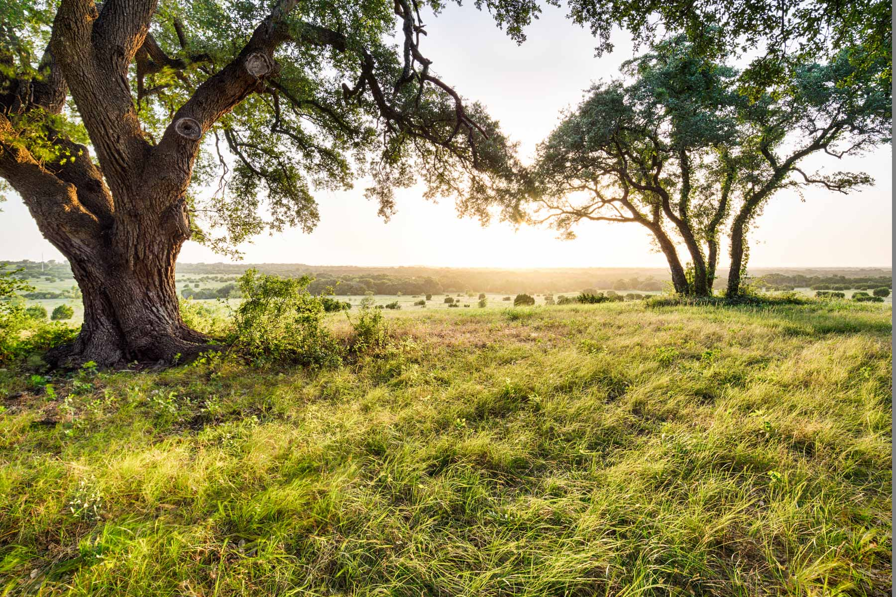 Land for Sale at Bosque Canyon Ranch 442 PR 1073 Lot III-8 Clifton, Texas 76634 United States
