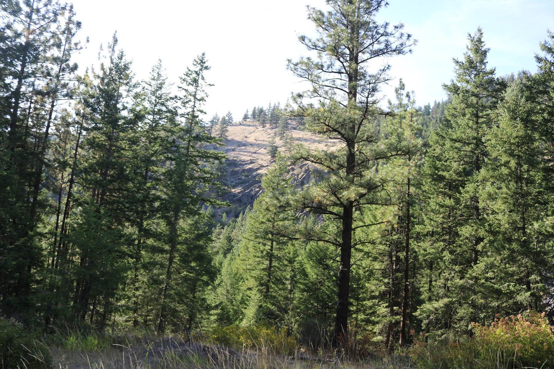 Land for Sale at Lot 1 Mclaughlin Creek Road Paradise, Montana 59856 United States