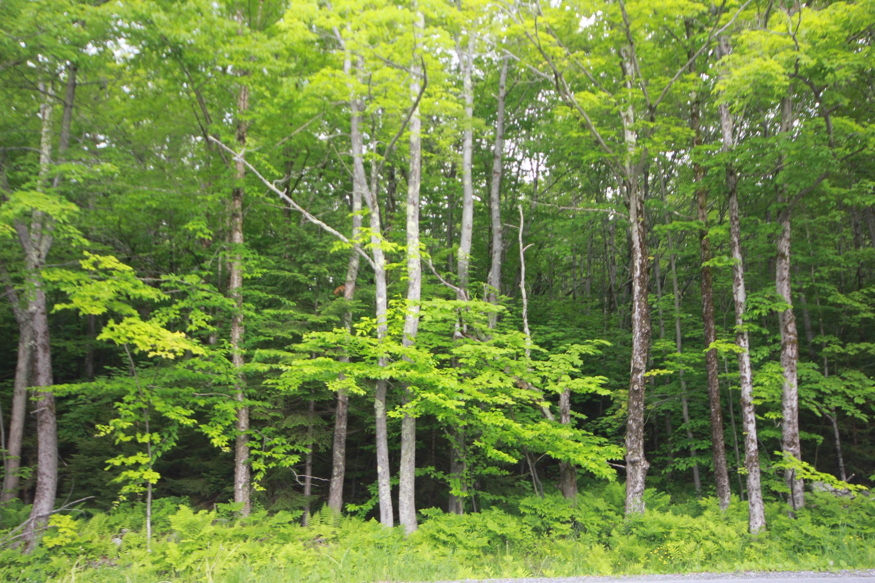 Land for Sale at Spectacular Location and Views Lot 5 Handle Rd 5 Dover, Vermont 05356 United States