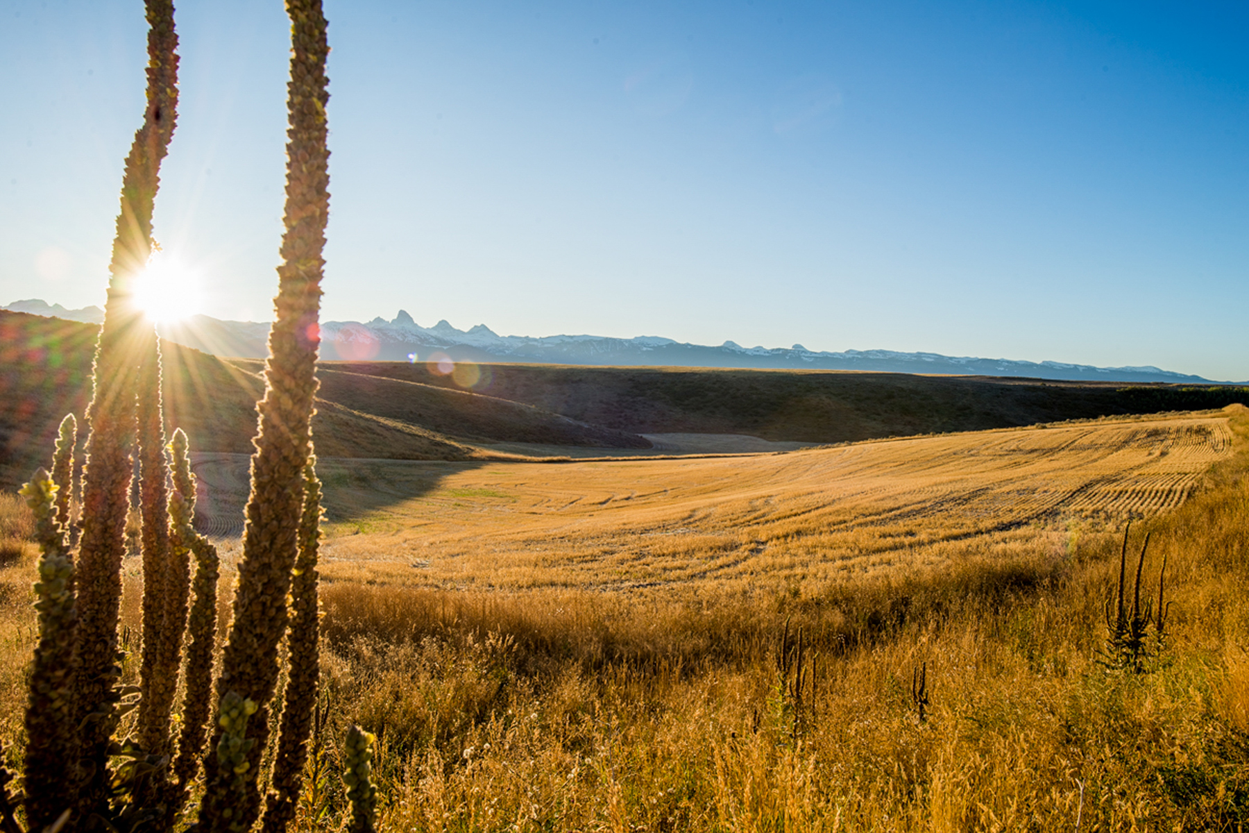 Land for Sale at Spring Hollow: Recreation Ranch Site 7779 Spirit Horse Trail Tetonia, Idaho 83452 United States