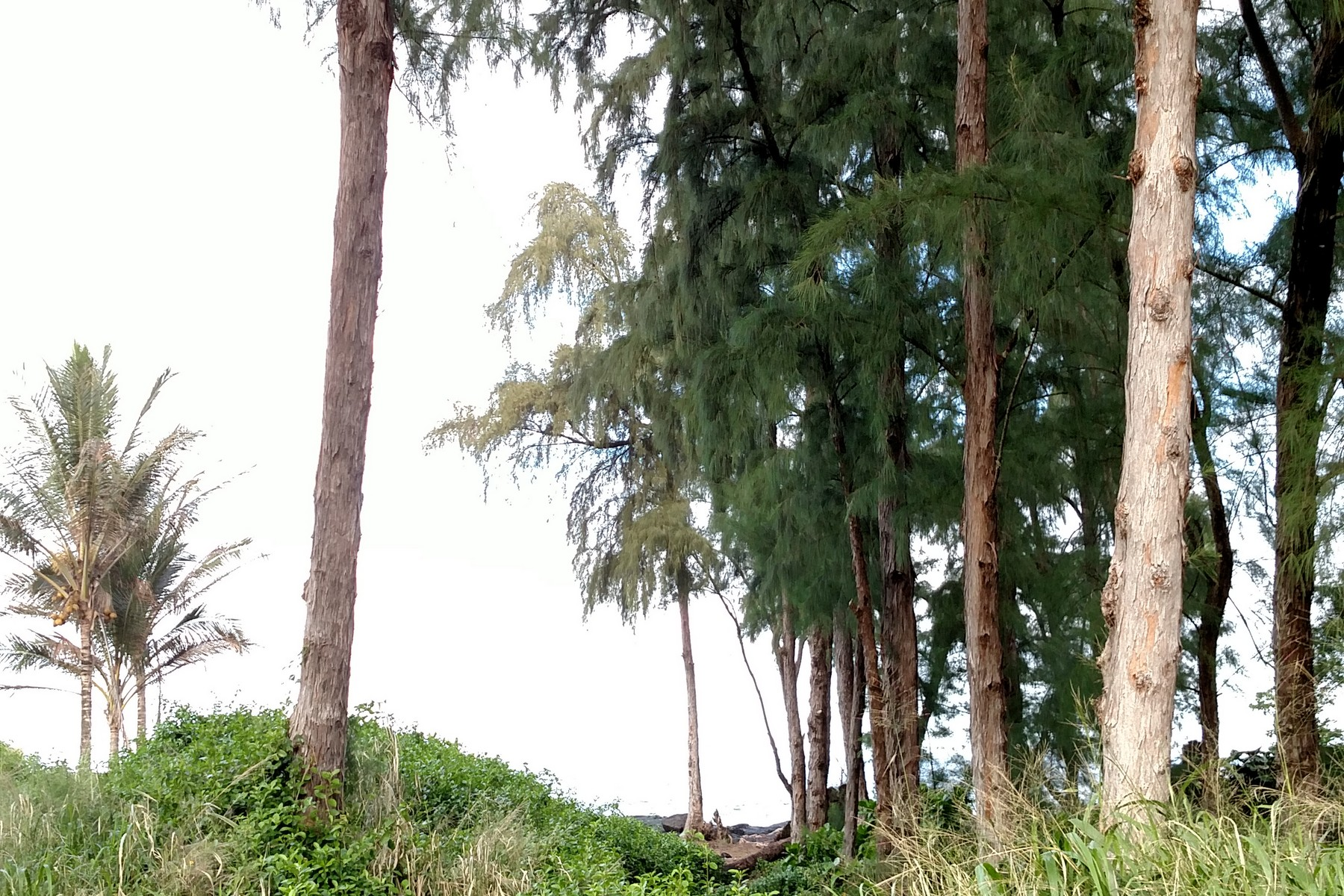 Additional photo for property listing at Hawaiian Paradise Park Ala Heiau Ave Keaau, Hawaii 96749 United States
