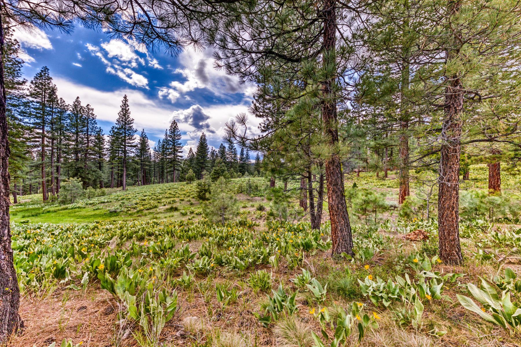 Land for Active at 157 Arrowleaf Road, Portola, CA 157 Arrowleaf Road Portola, California 96122 United States