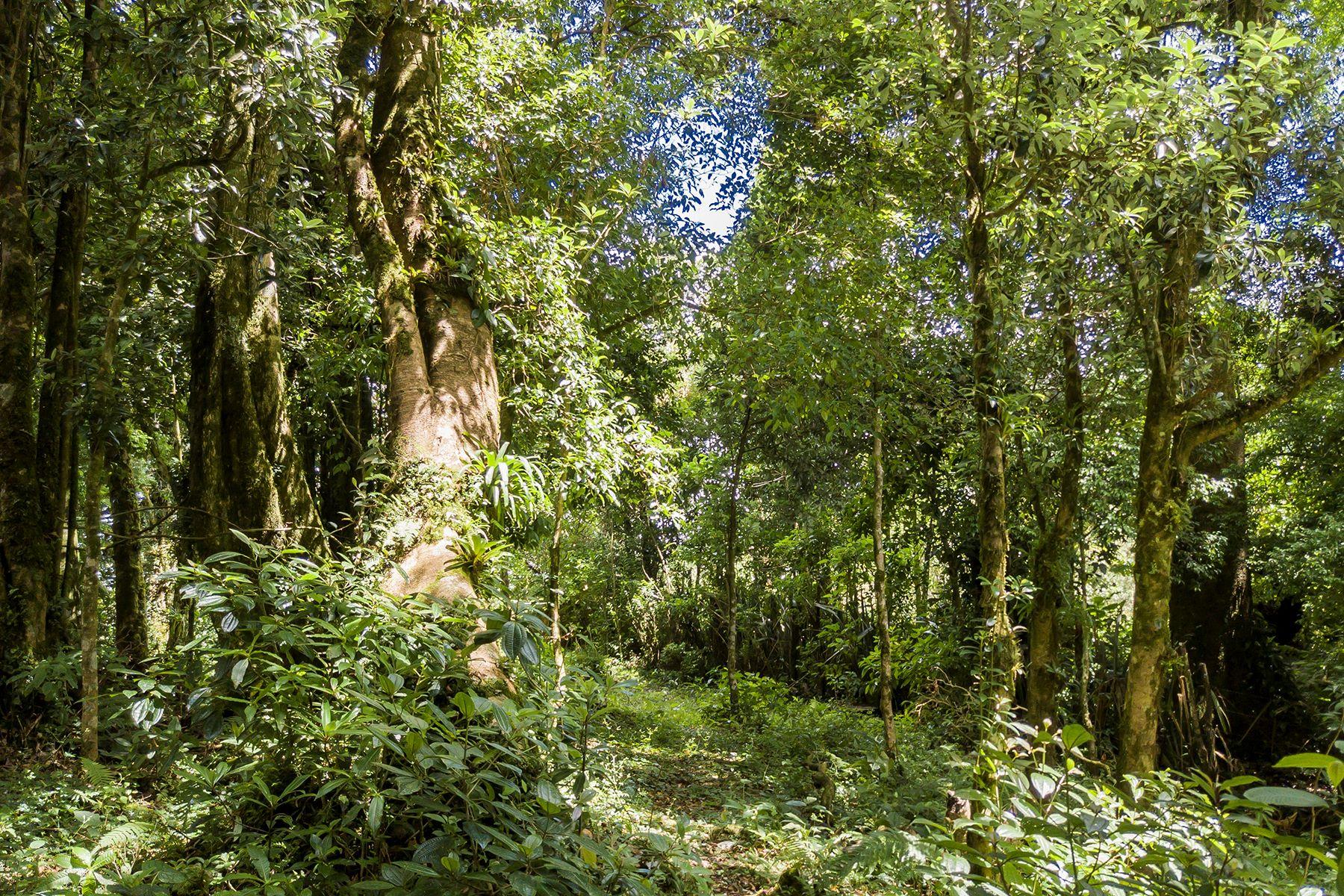 Land for Sale at Bosque Bouganvilea Barva, Heredia Costa Rica