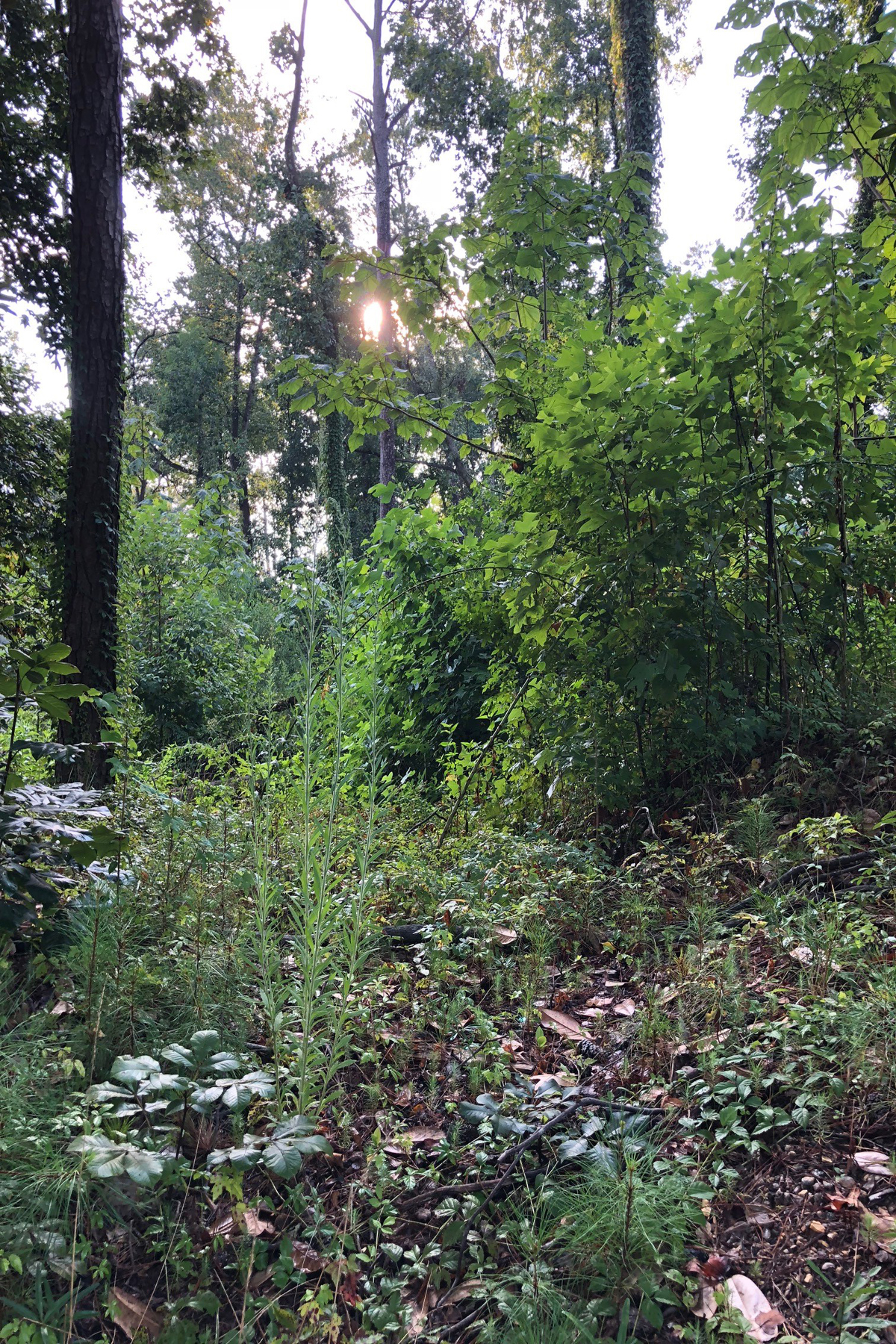 Land for Sale at Great Building Site Minutes From Buckhead 2569 Bohler Road Atlanta, Georgia 30327 United States