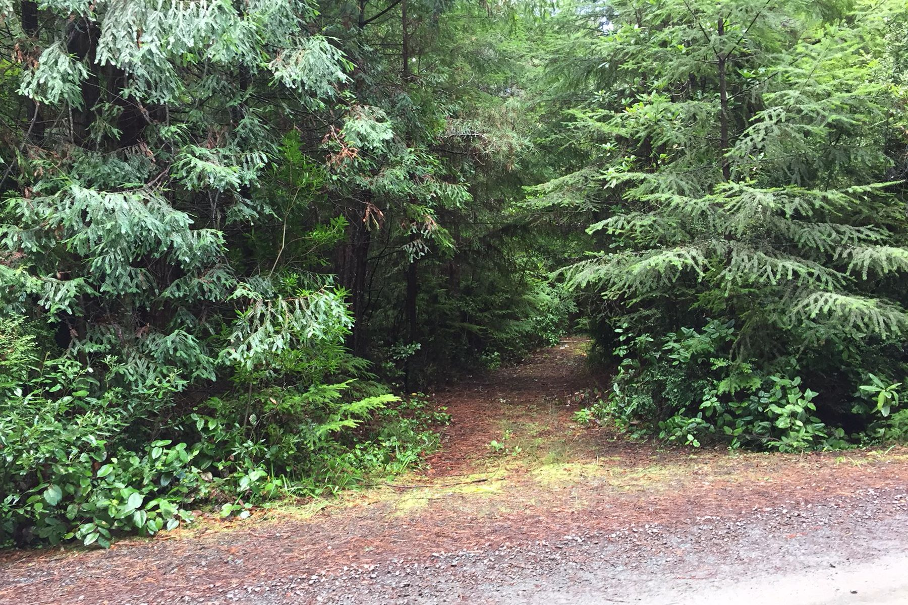 Additional photo for property listing at Pristine Forest Land 44301 Surfwood Drive Mendocino, California 95460 Estados Unidos