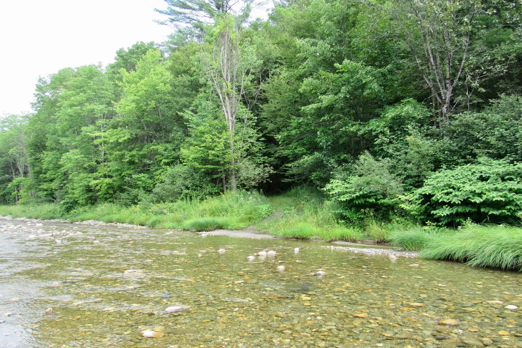 Land for Sale at 82.2 Acres Scales Road Bridgewater, Vermont 05034 United States