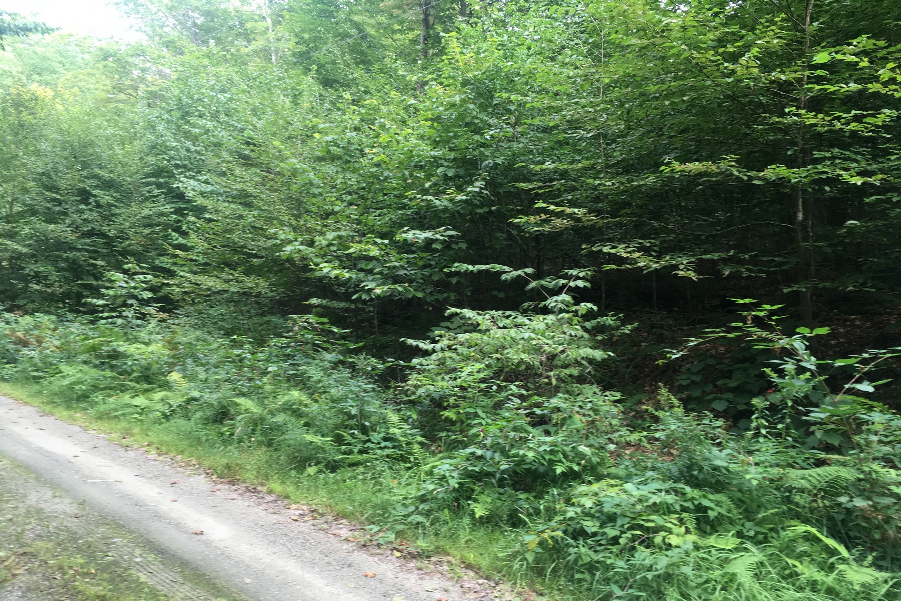 Land for Sale at 5+ Acre Reading Building Lot Rist Hill Rd Lot 21C Reading, Vermont 05062 United States