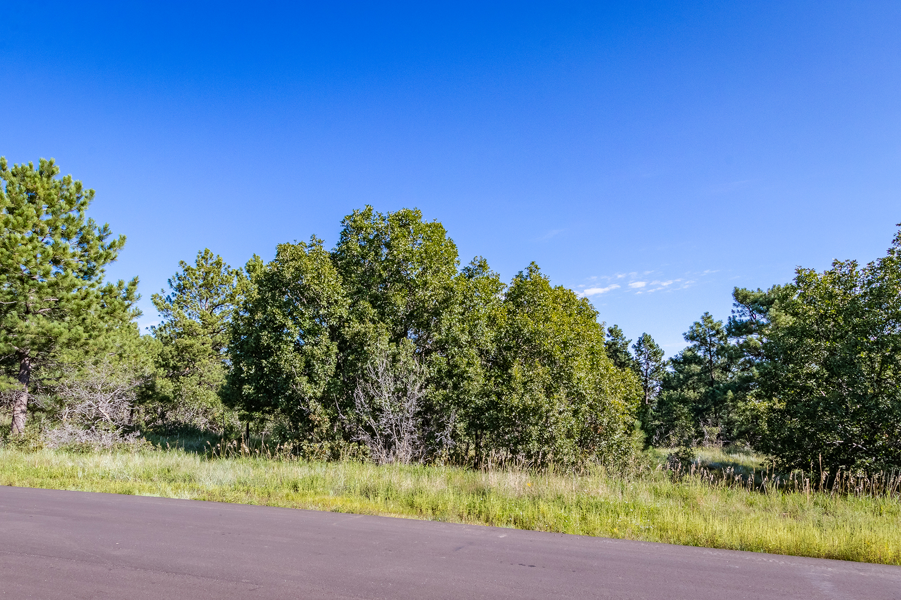 Additional photo for property listing at * THE LAST LOT * 1720 Brantfeather Grv Colorado Springs, Colorado 80906 United States