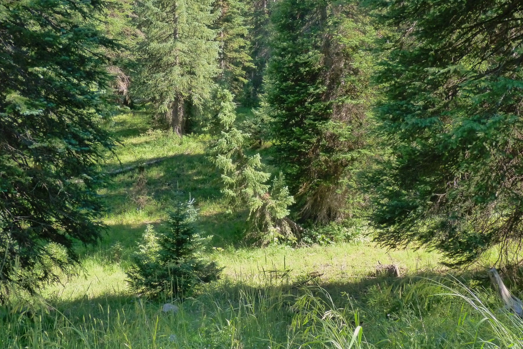 Land for Sale at 2 Acres of Remote Wilderness TBD 7th Street Irwin Crested Butte, Colorado 81224 United States