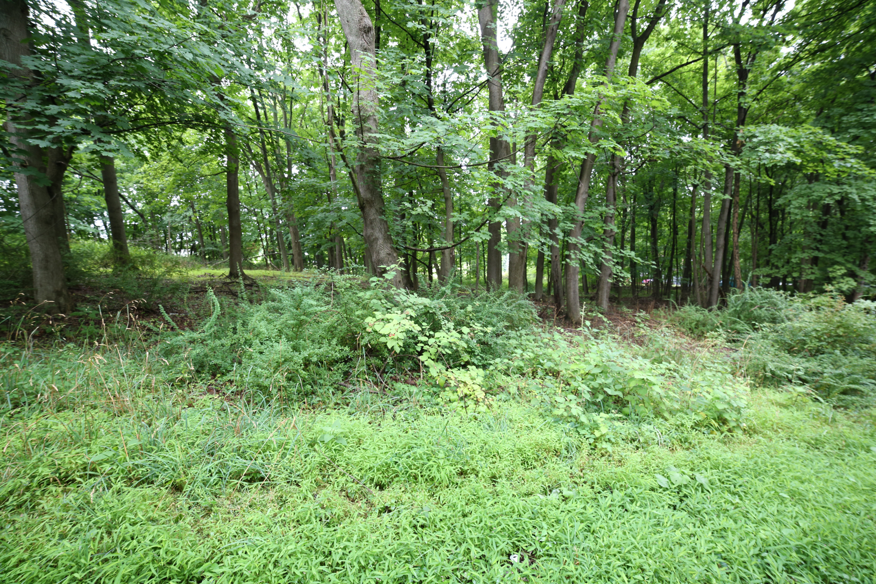 Land for Sale at Chester Land Quaker Hill Road Chester, New York 10918 United States