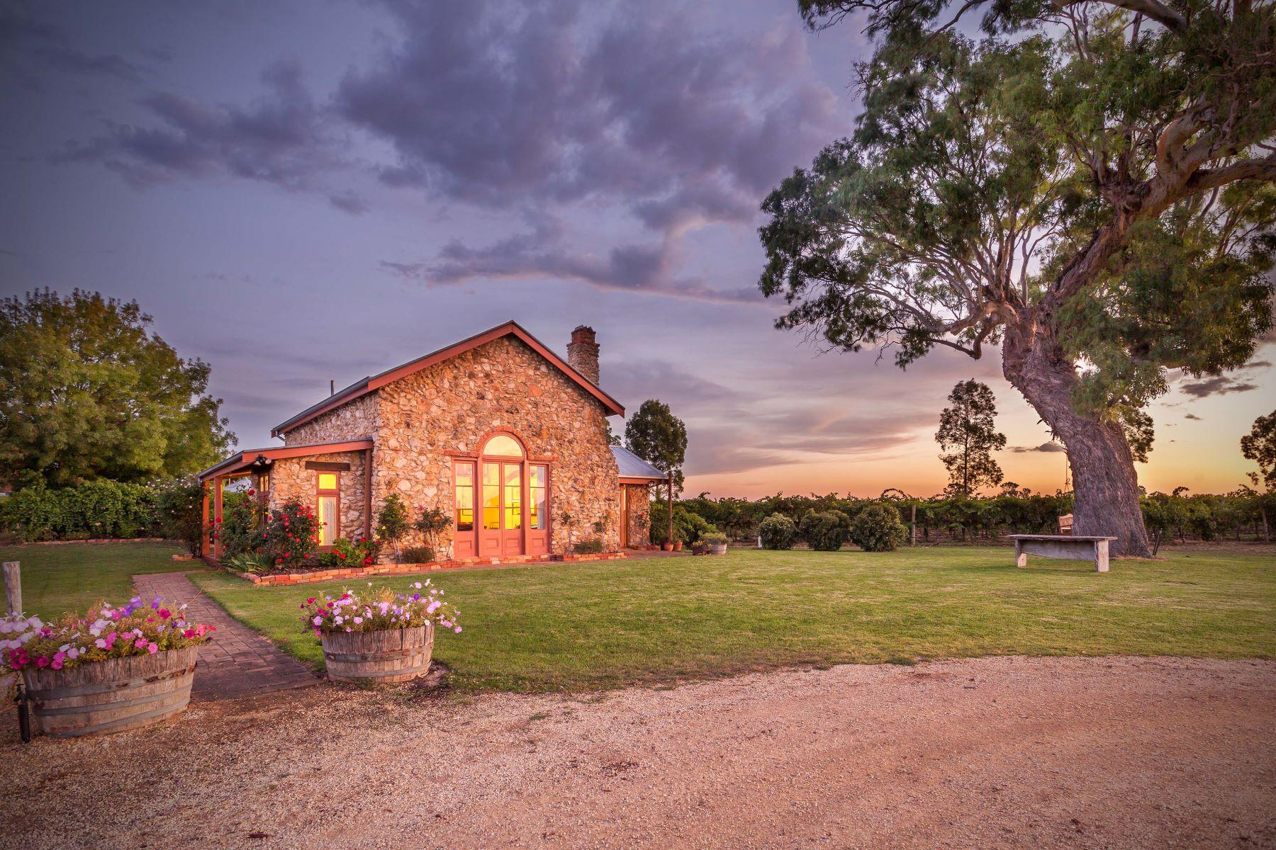 Vineyard for Sale at Highbank Coonawarra, South Australia, Australia