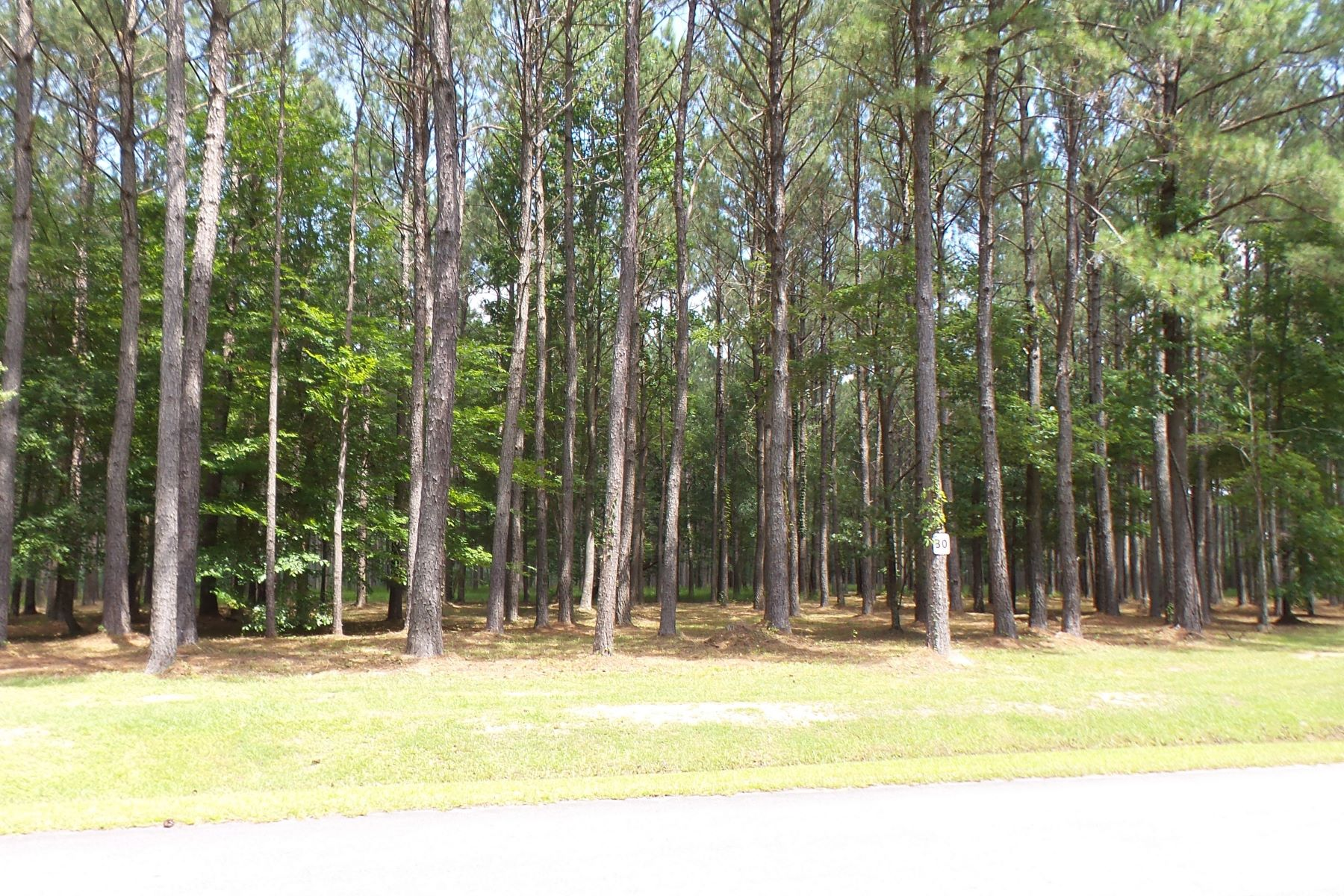 Land for Sale at Large Wooded Canopy Lot 90 Madison Avenue Oriental, North Carolina, 28571 United States