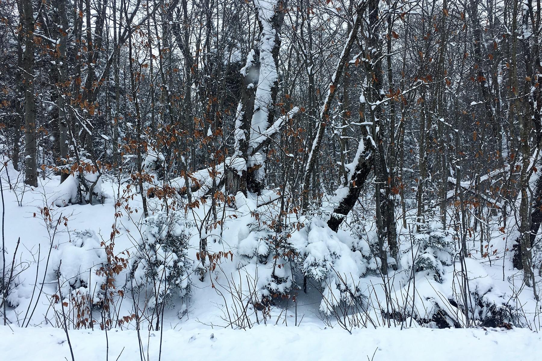 أراضي للـ Sale في Corner Lot in Alpenwald lot 343 Bergrucken Ln, Stamford, Vermont, 05352 United States