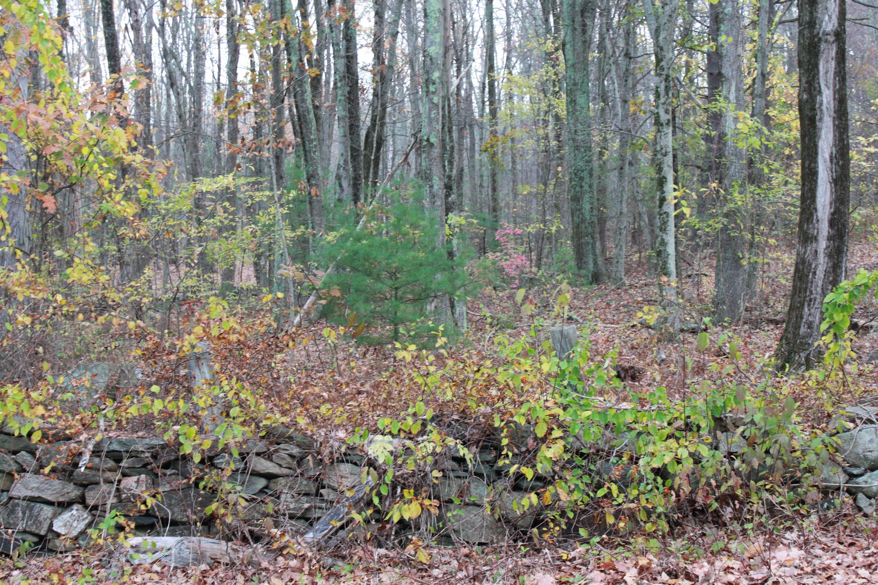 Terrain pour l Vente à Beautiful Lot On Scenic Country Road 19 George Hill Road Grafton, Massachusetts 01519 États-Unis