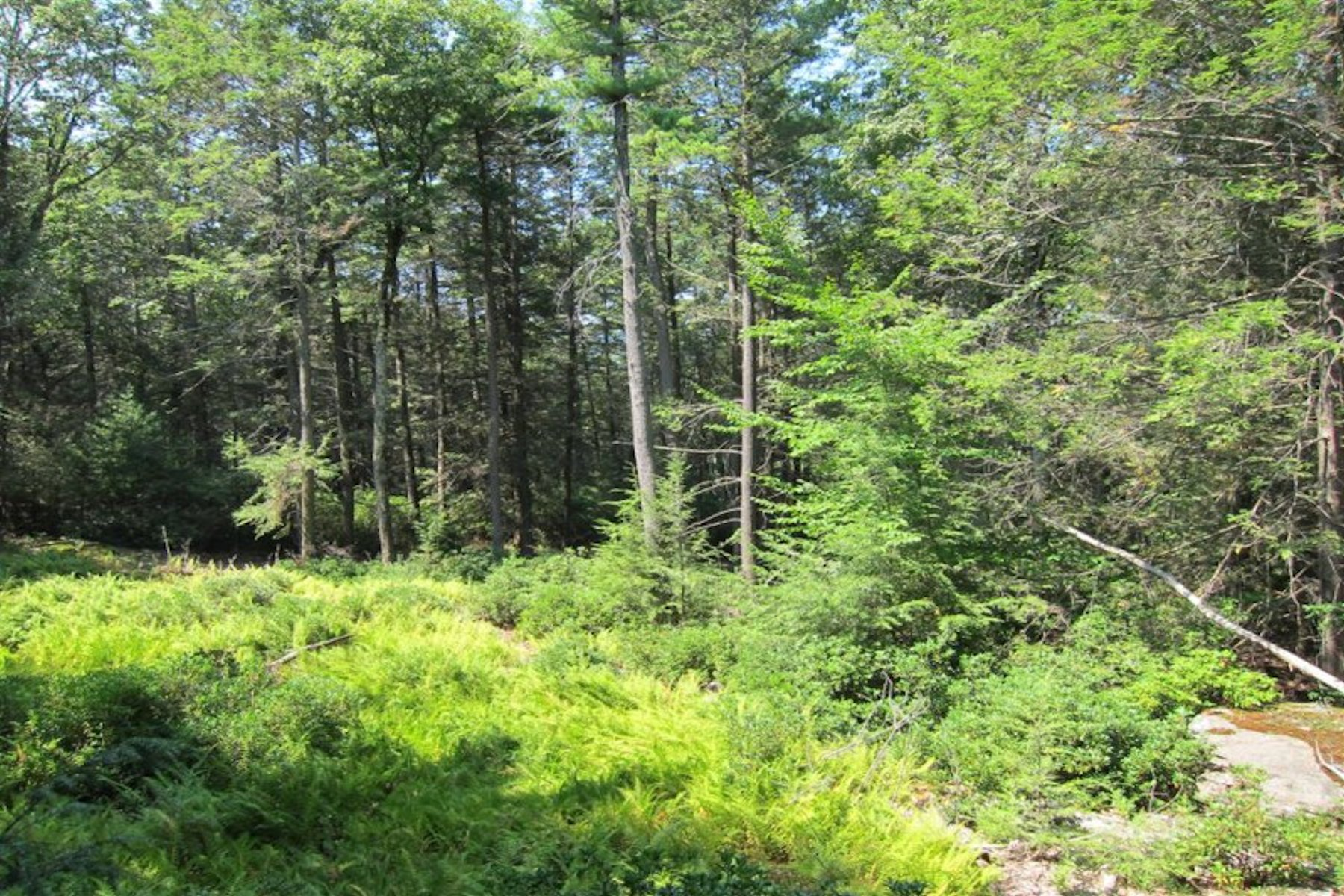 Additional photo for property listing at Peaceful Acreage High Rd. Ext Woodstock, New York 12498 United States