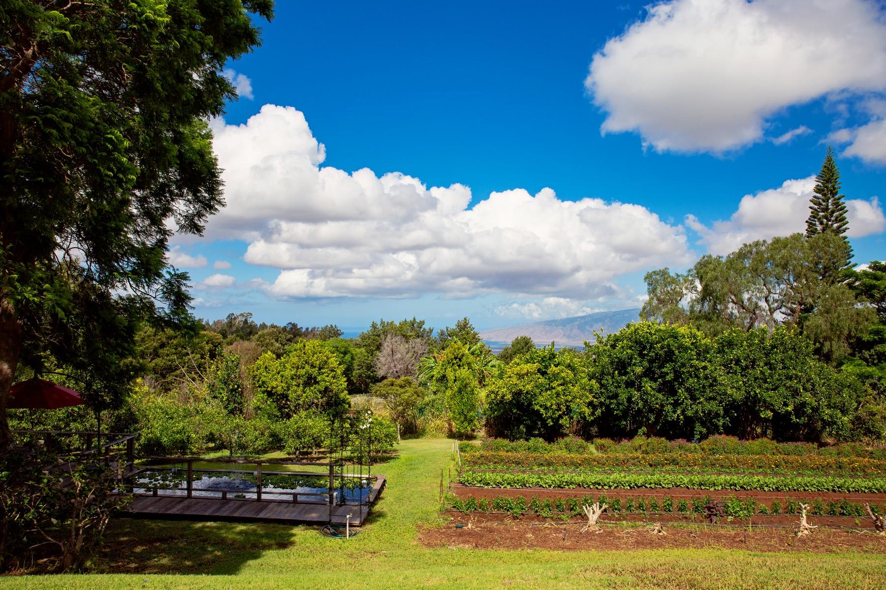 Farm / Ranch / Plantation for Sale at Bountiful Upcountry Home & Farm 200 Hoopalua Drive Makawao, Hawaii 96768 United States