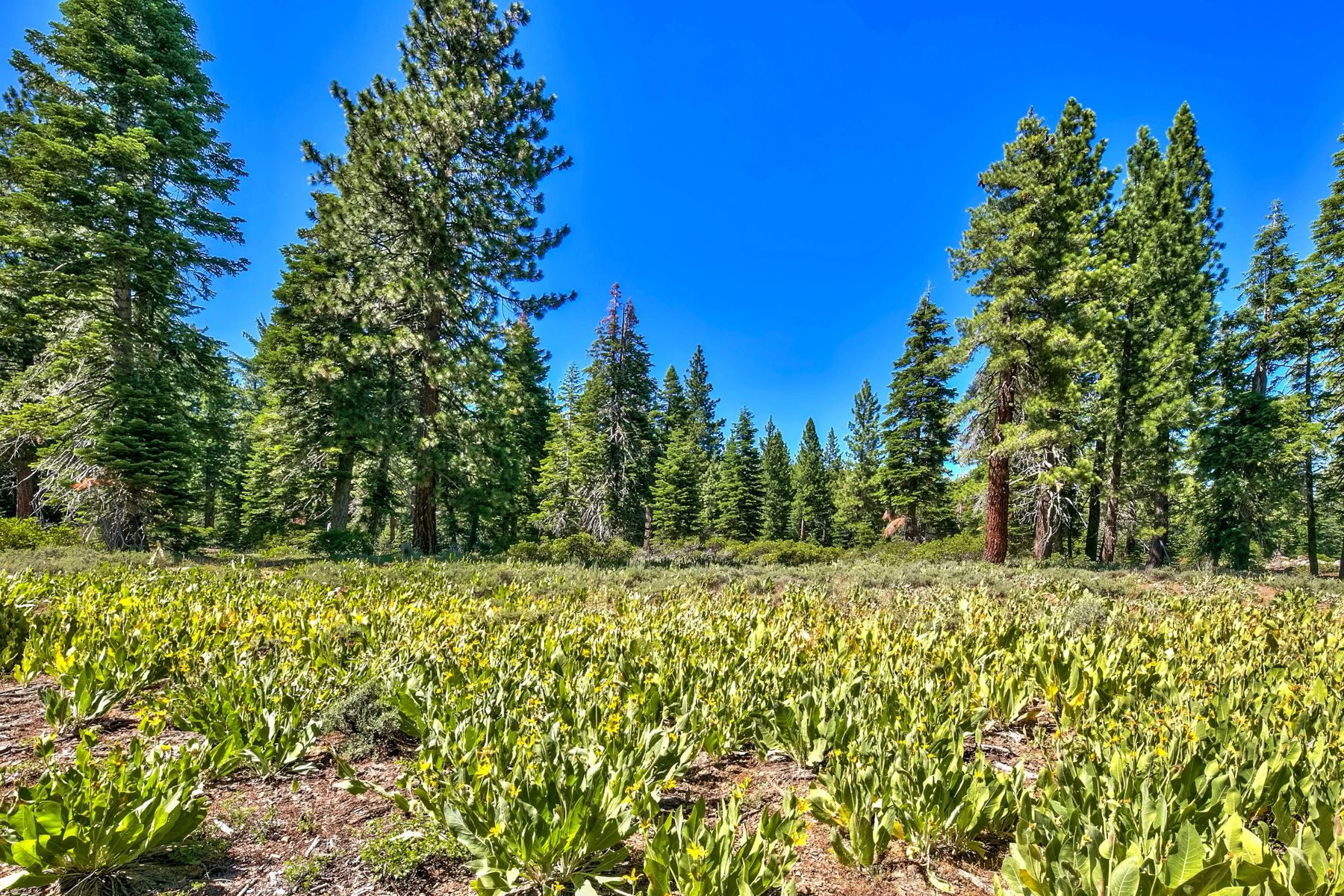 Additional photo for property listing at 11743 Lockwood Dr, Truckee, CA 96161 11743 Lockwood Dr. Truckee, California 96161 United States