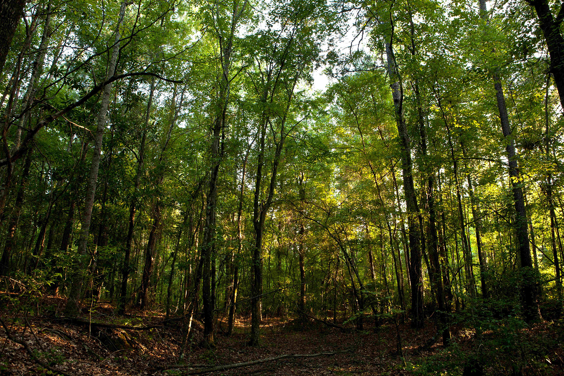 Land for Sale at Lovely Wooded Corner Lot In Serenbe Community With Grange Lake Views 10715 Serenbe Lane Chattahoochee Hills, Georgia 30268 United States